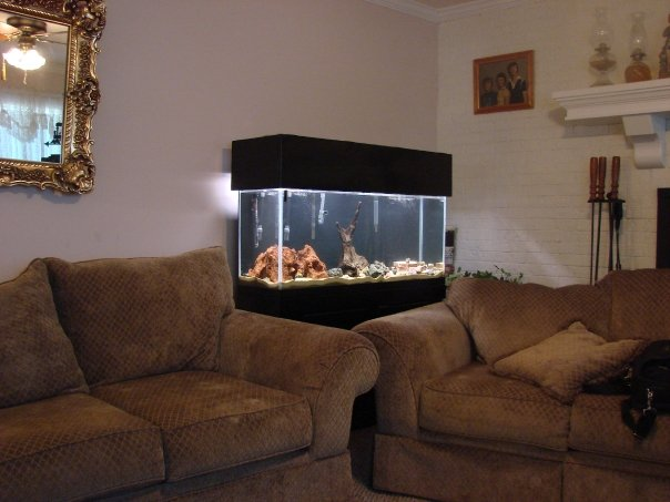 cichlids.com: 55 Gallon Living Room Aquarium