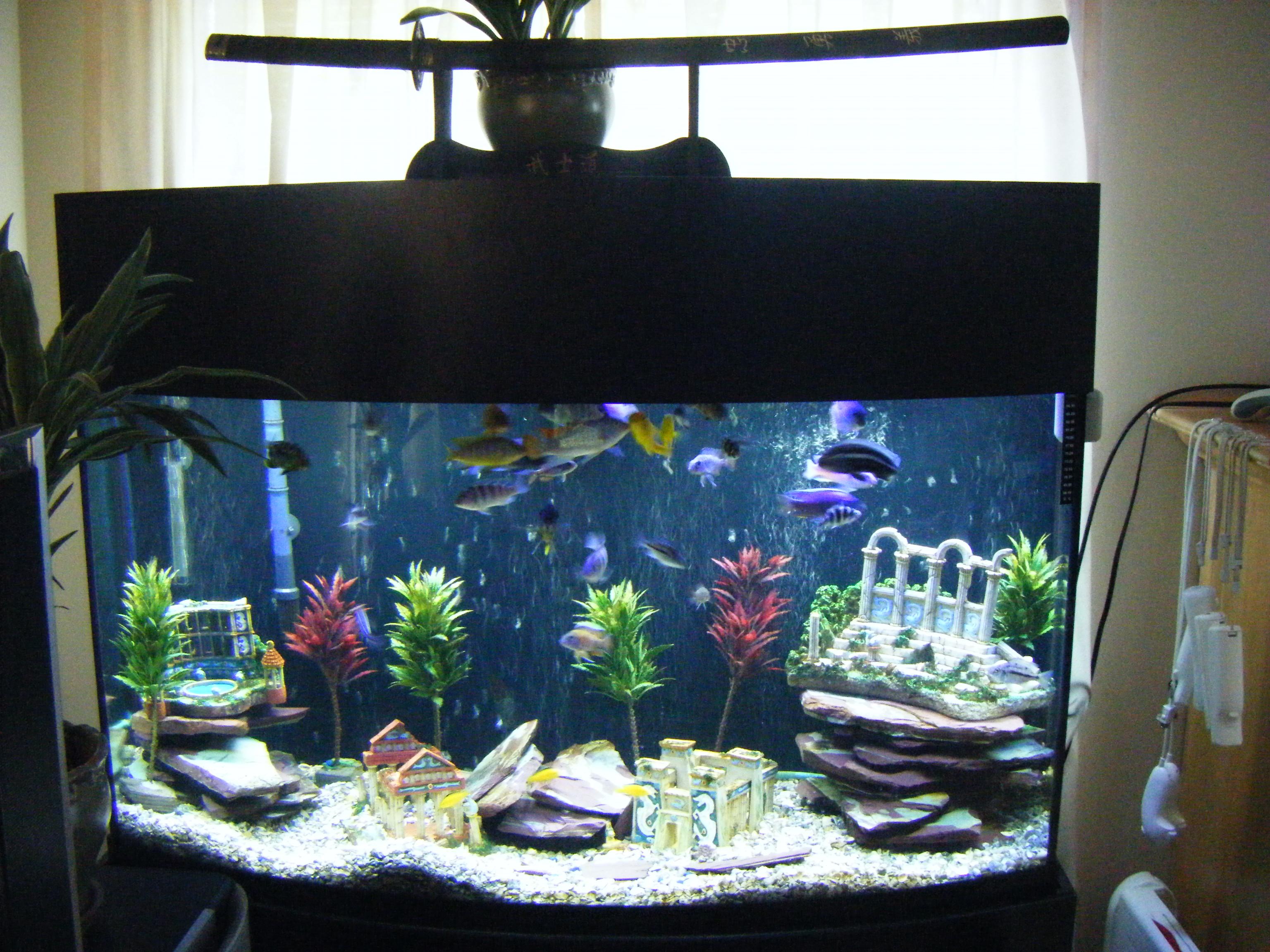 Fish aquarium edmonton - Lost City Of Atlantis
