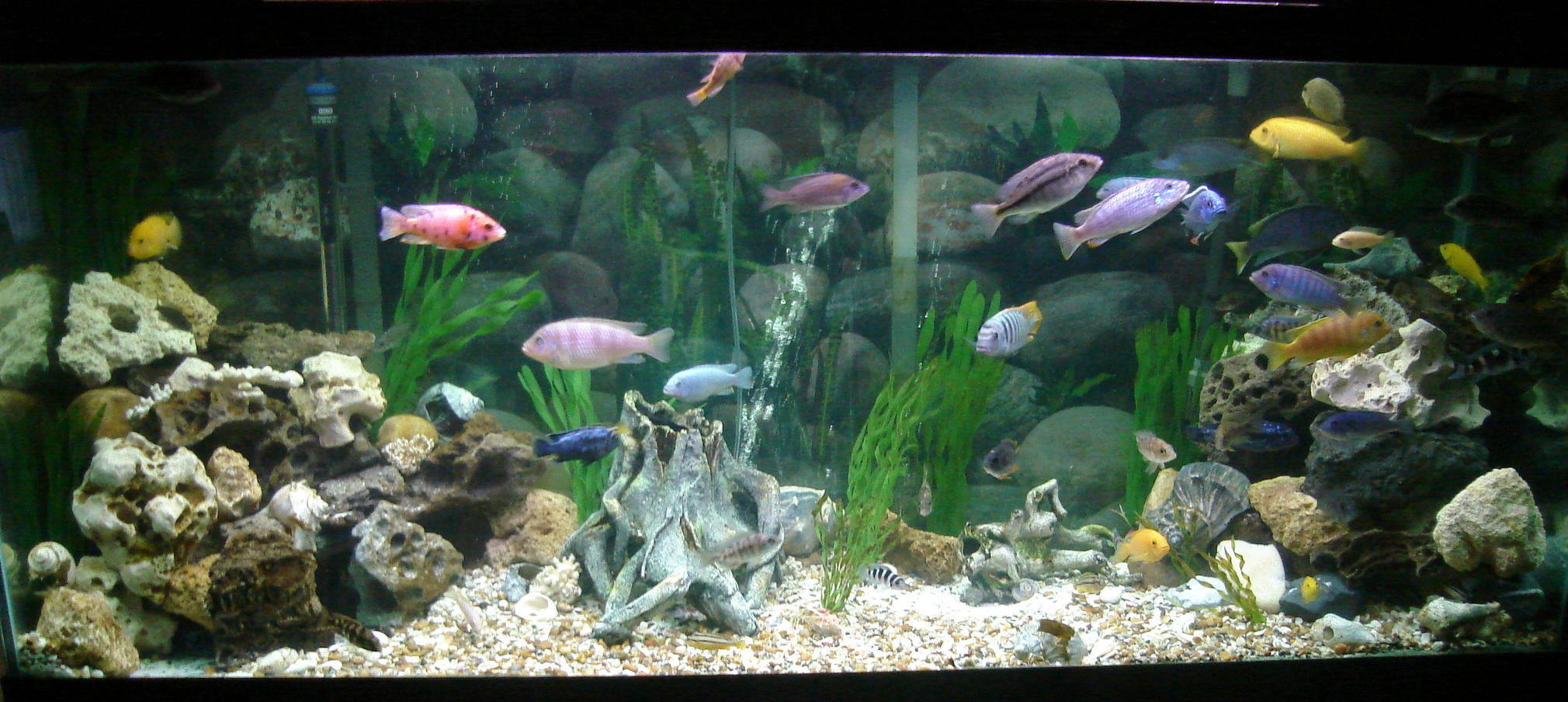 African cichlid tanks rocks related keywords african for African cichlid rock decoration