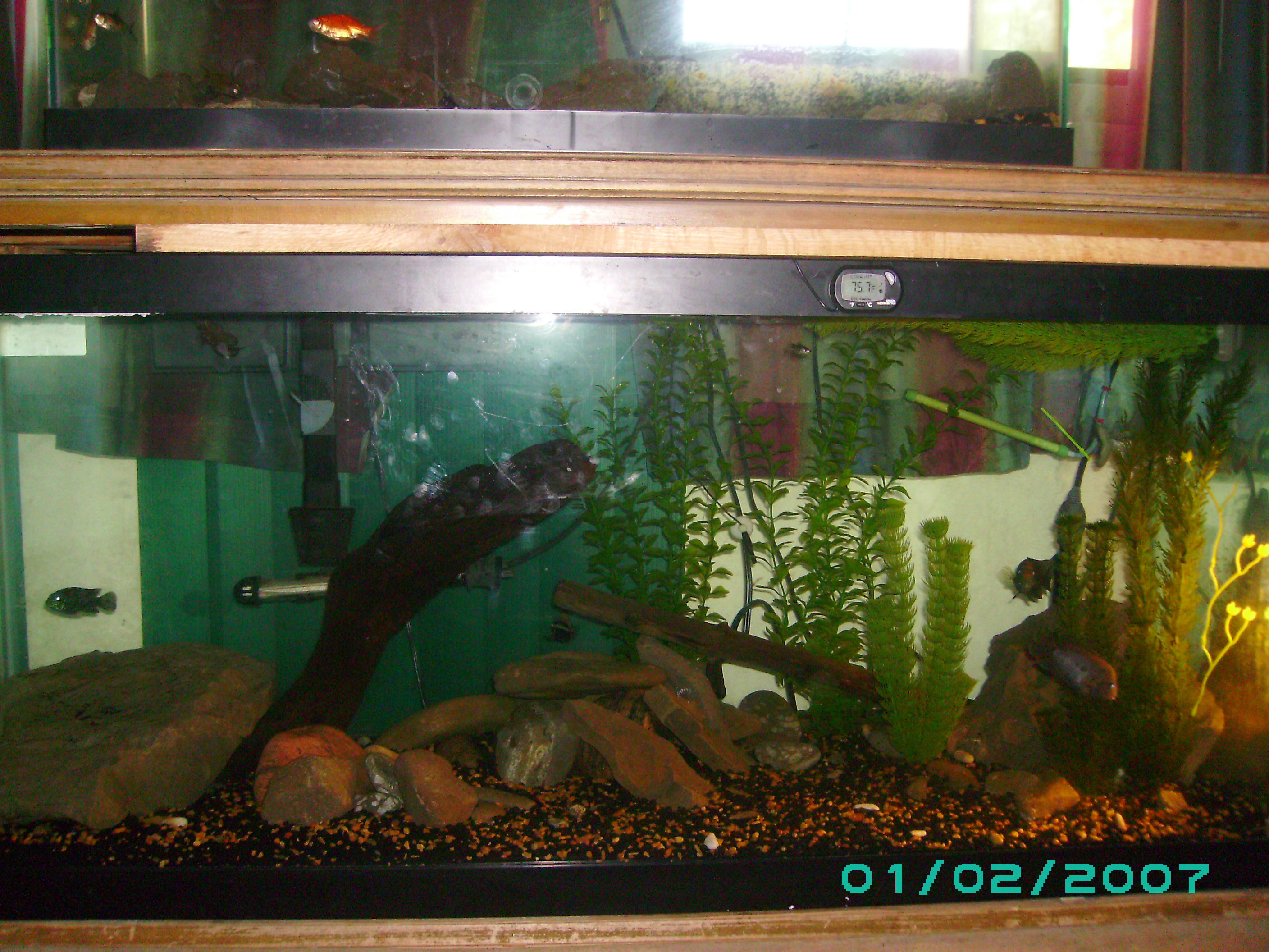 10 gallon fish tank examples tank examples for Fish tank net