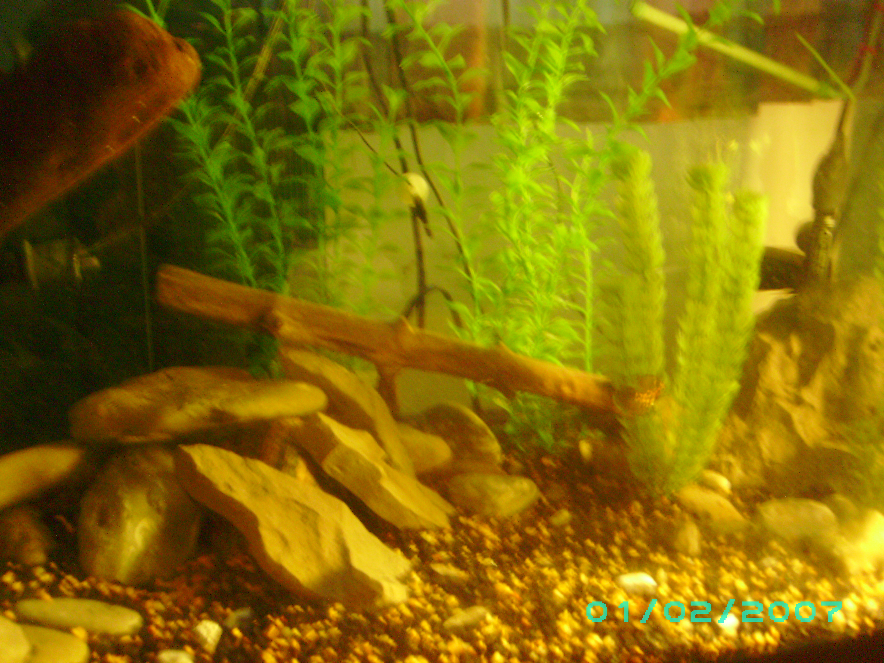 Tank examples 75 gallon assorted cichlid for African cichlid rock decoration