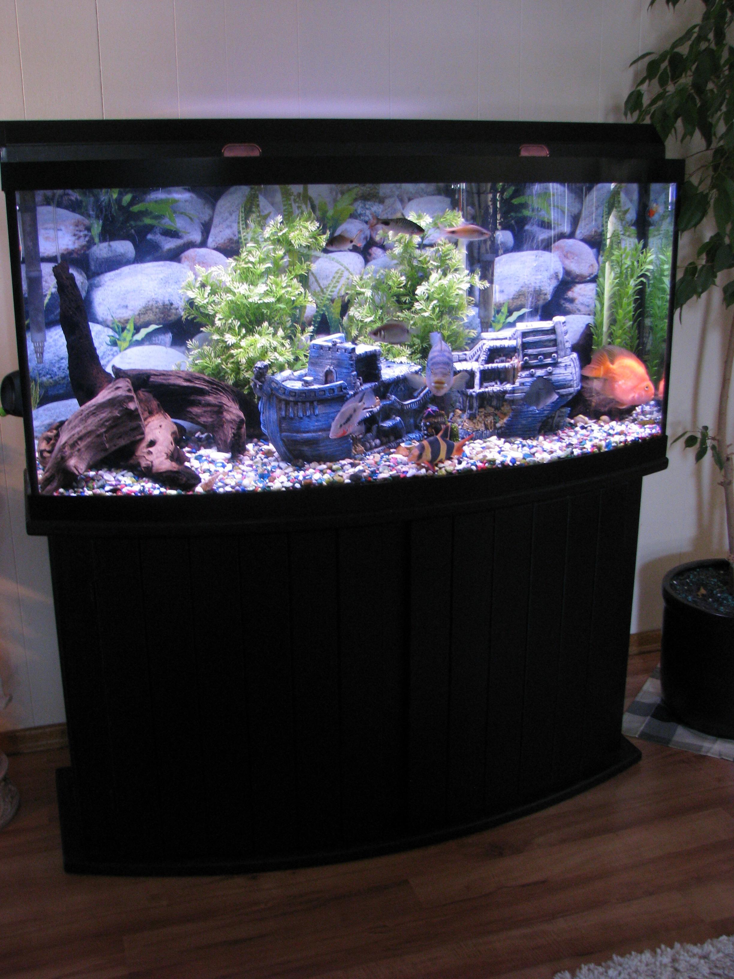 Cichlids 72 Gallon Bow Front Tank & 72 Gallon Bow Front Aquarium For Sale - 1000+ Aquarium Ideas