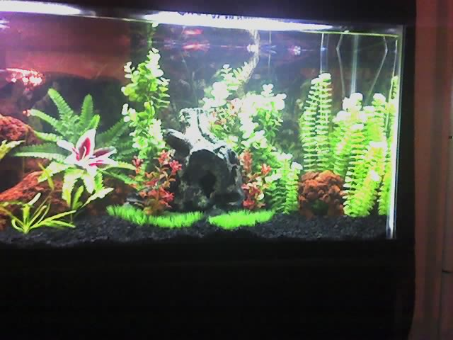 Tank examples tropical fish tank for for 55 gal fish tank