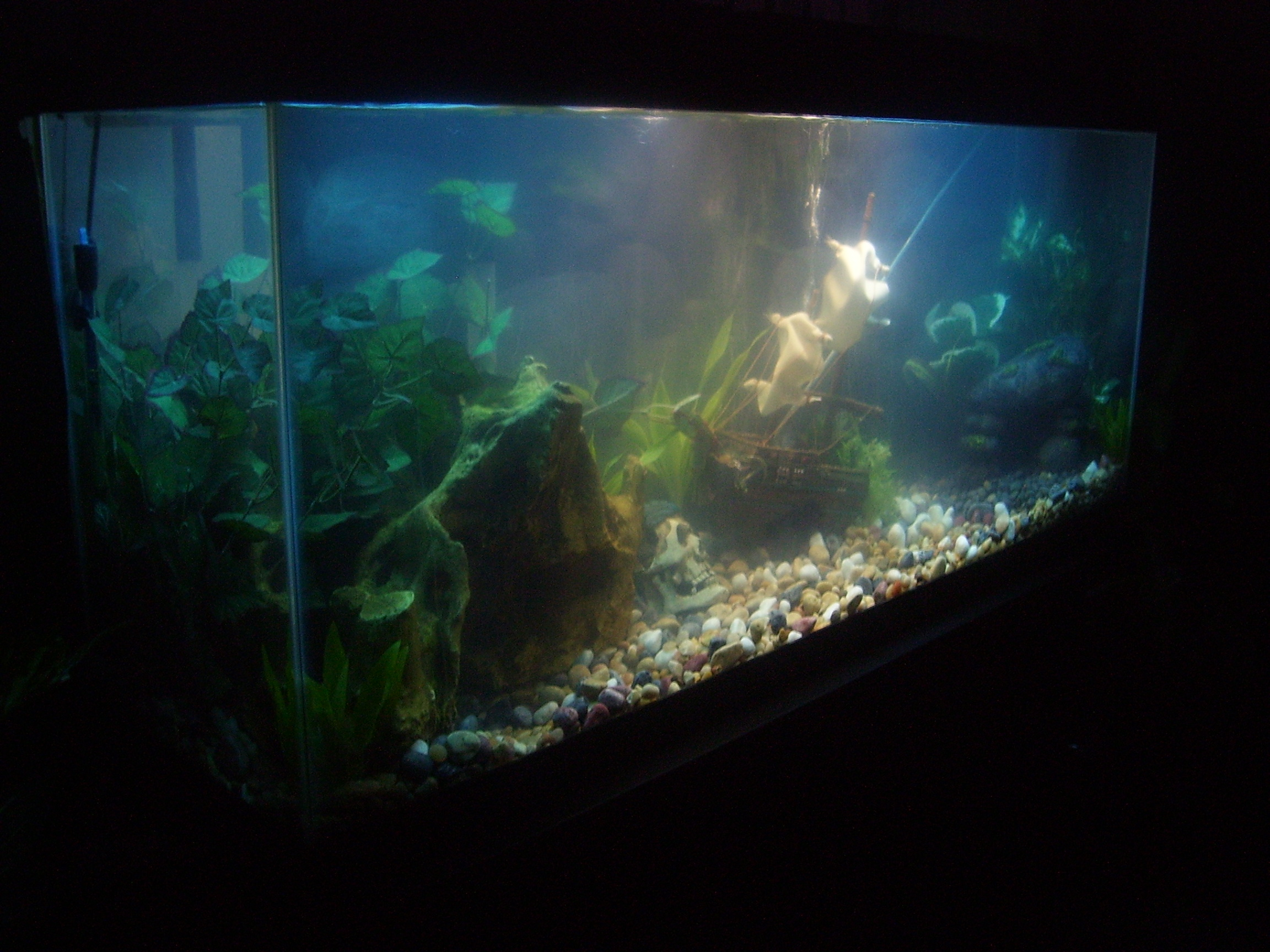 Aq2dsqag7wu likewise Fish Tank Decorations besides Jack Dempsey Biography moreover Diy Paludarium Project Journal 193455 likewise Top Freshwater Tanks. on oscar cichlids in 55 gal tank