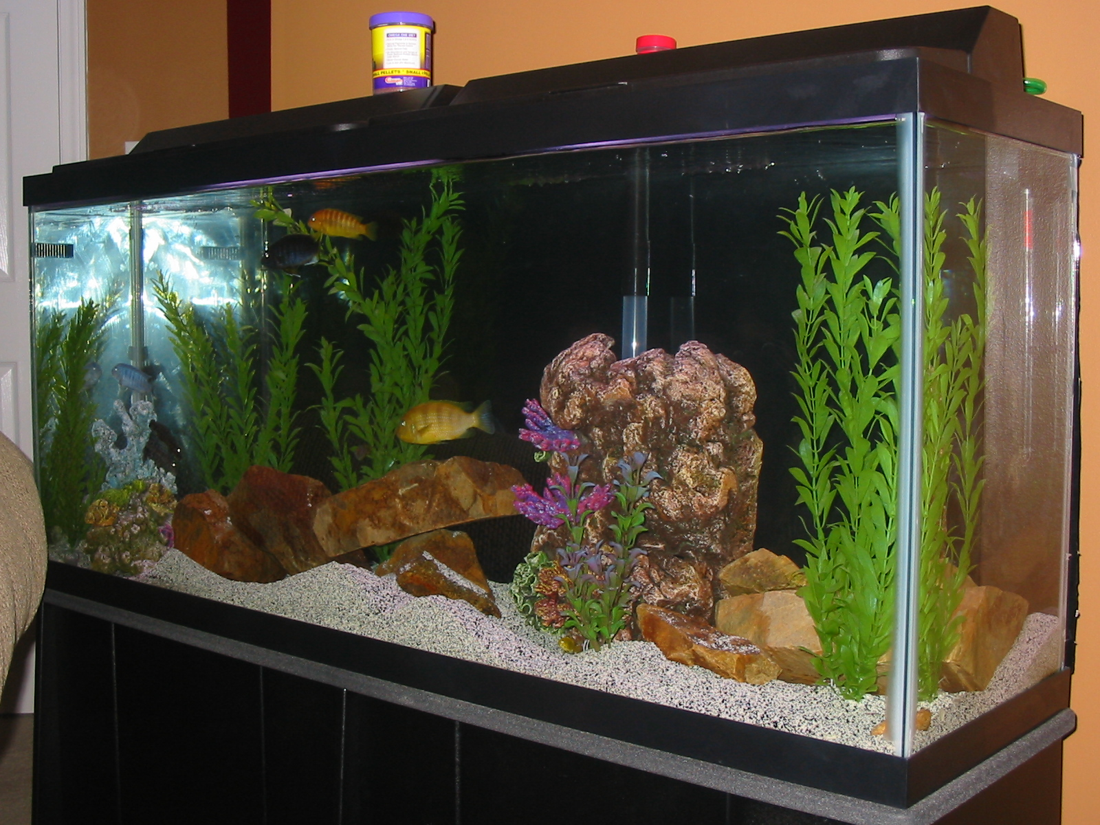 55 gallon fish tank in litres fish tank pauls 55 gallon for 55 gallon corner fish tank