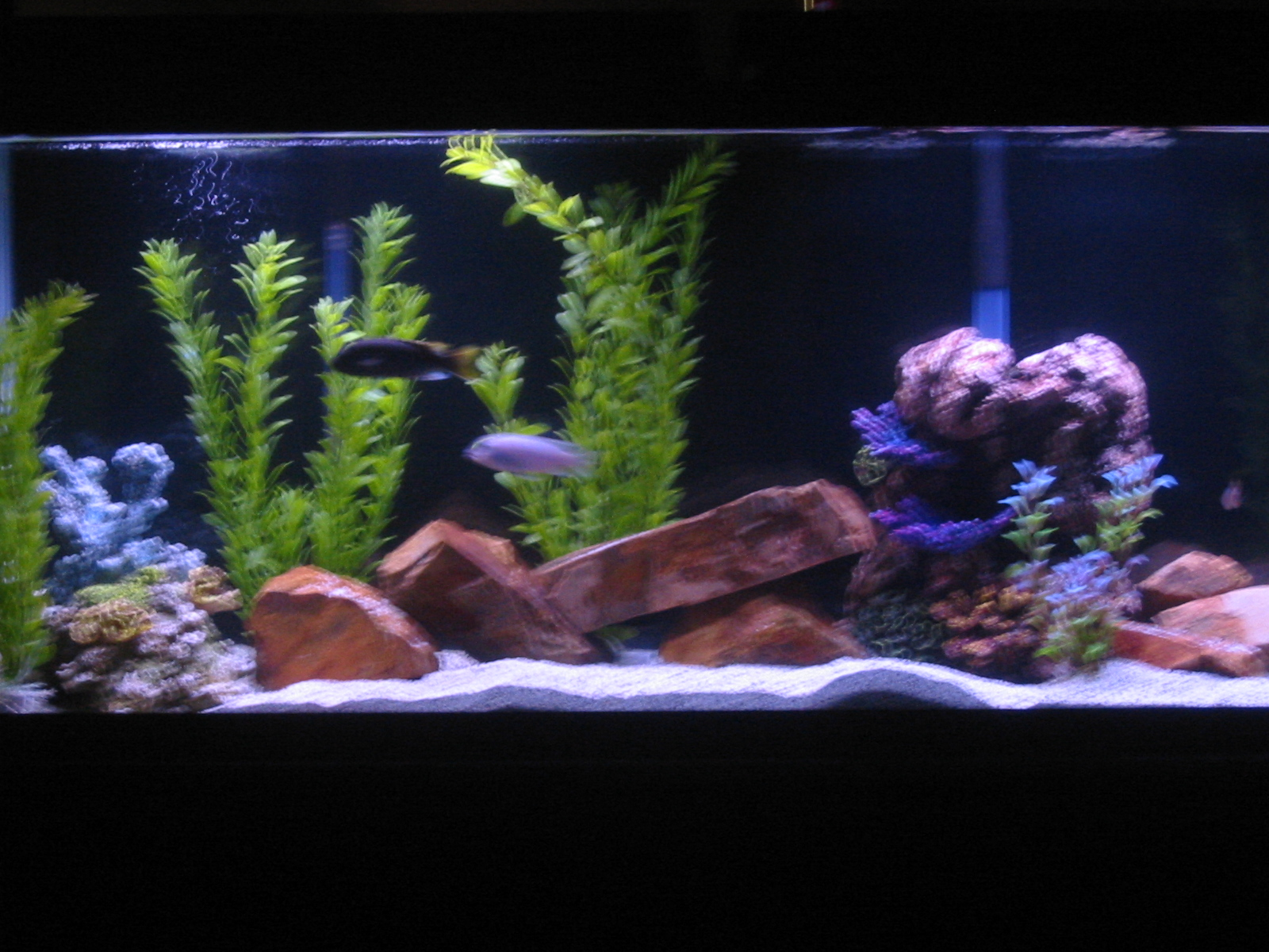 Tank examples my 55 gallon for 55 gallon aquarium decoration ideas