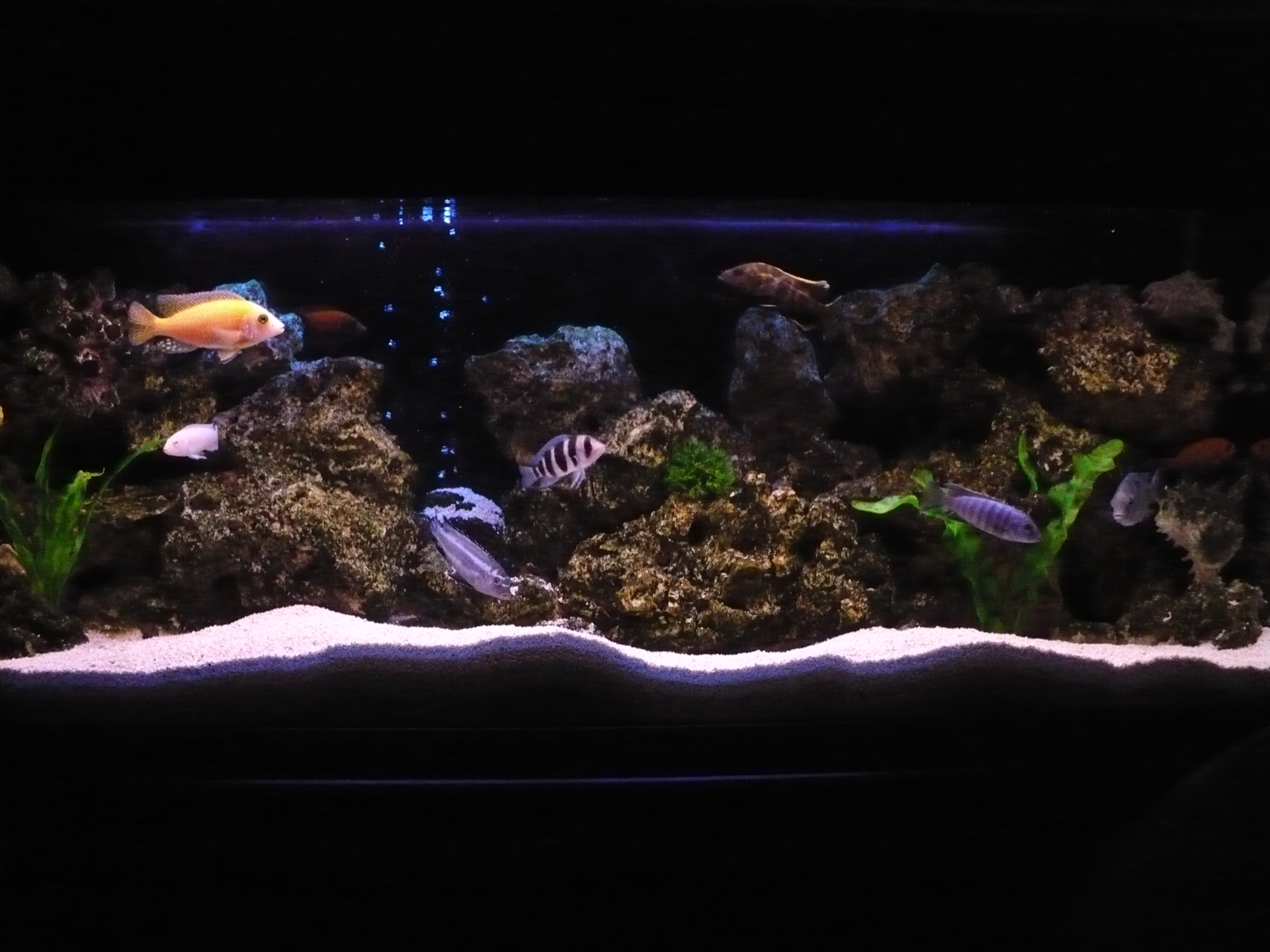 Tank examples 4ft cichlid set up for Setting up a fish tank