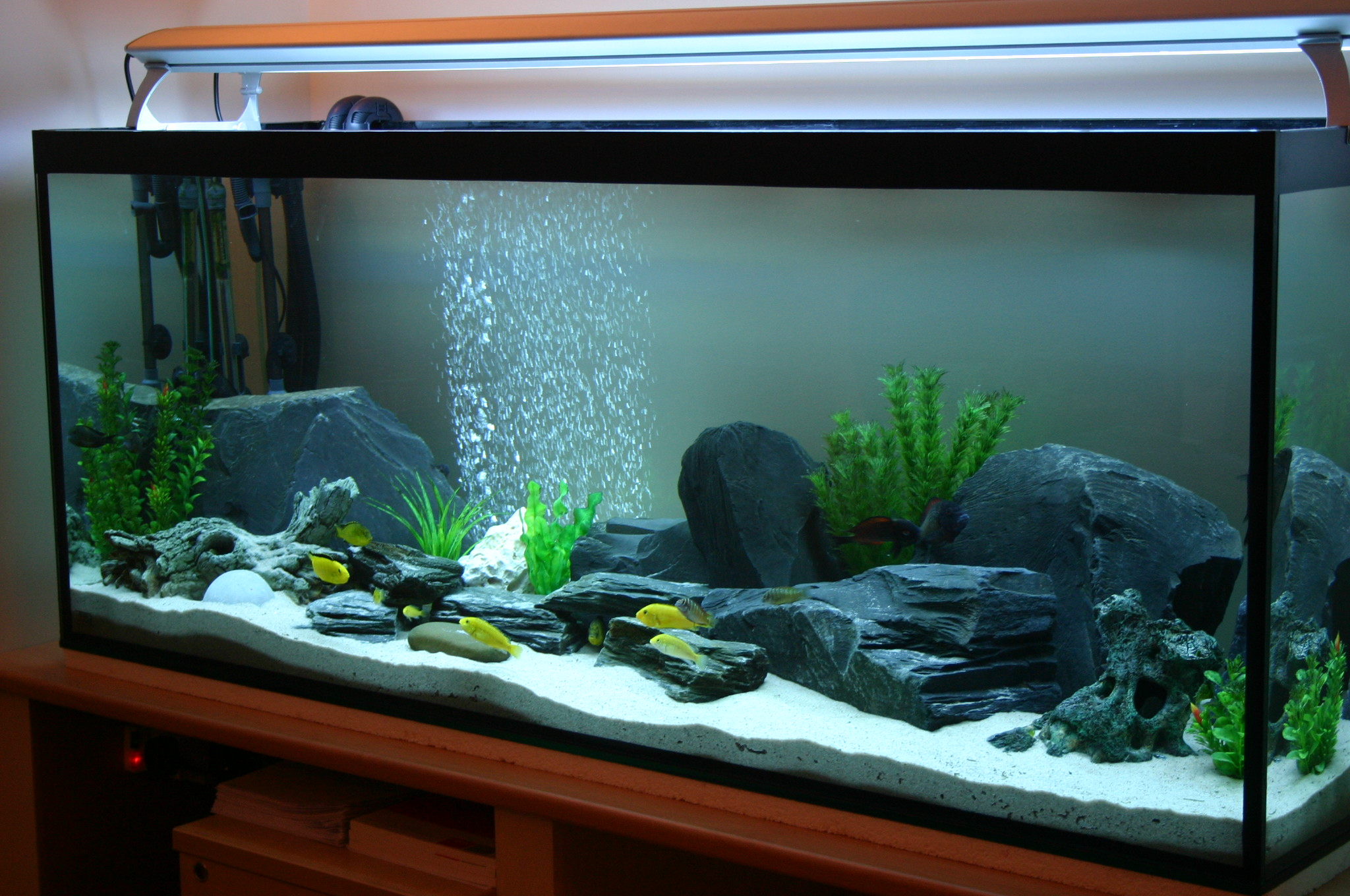 Tank examples all setup for How to setup a freshwater fish tank