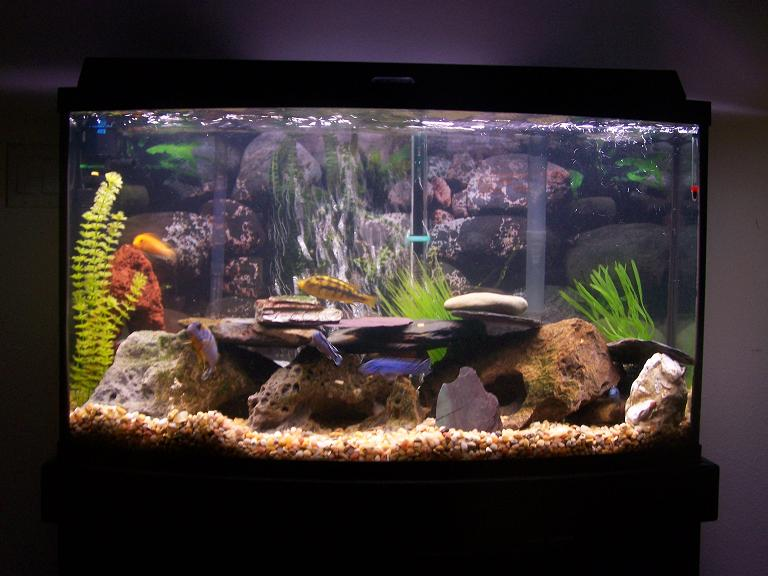 Tank examples 36 gallon bow front for Bow front fish tank