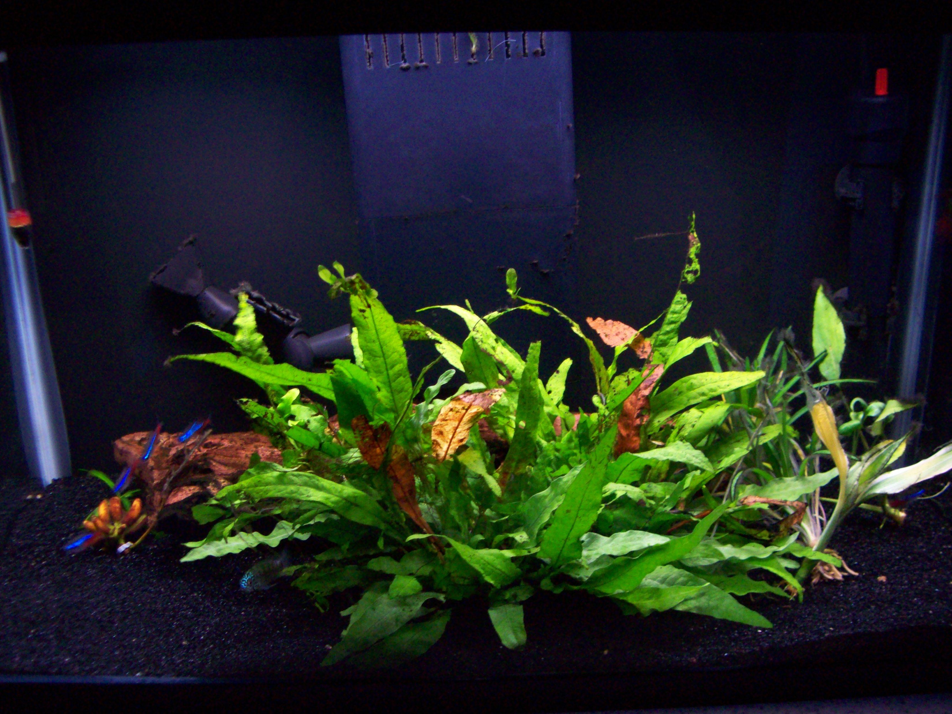 10 gallon fish tank recommendations 2017 fish tank for Fish for ten gallon tank