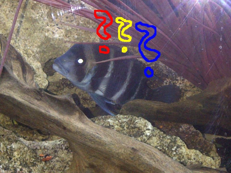 Fish stores for cichlids in buffalo ny for Fishing in buffalo ny