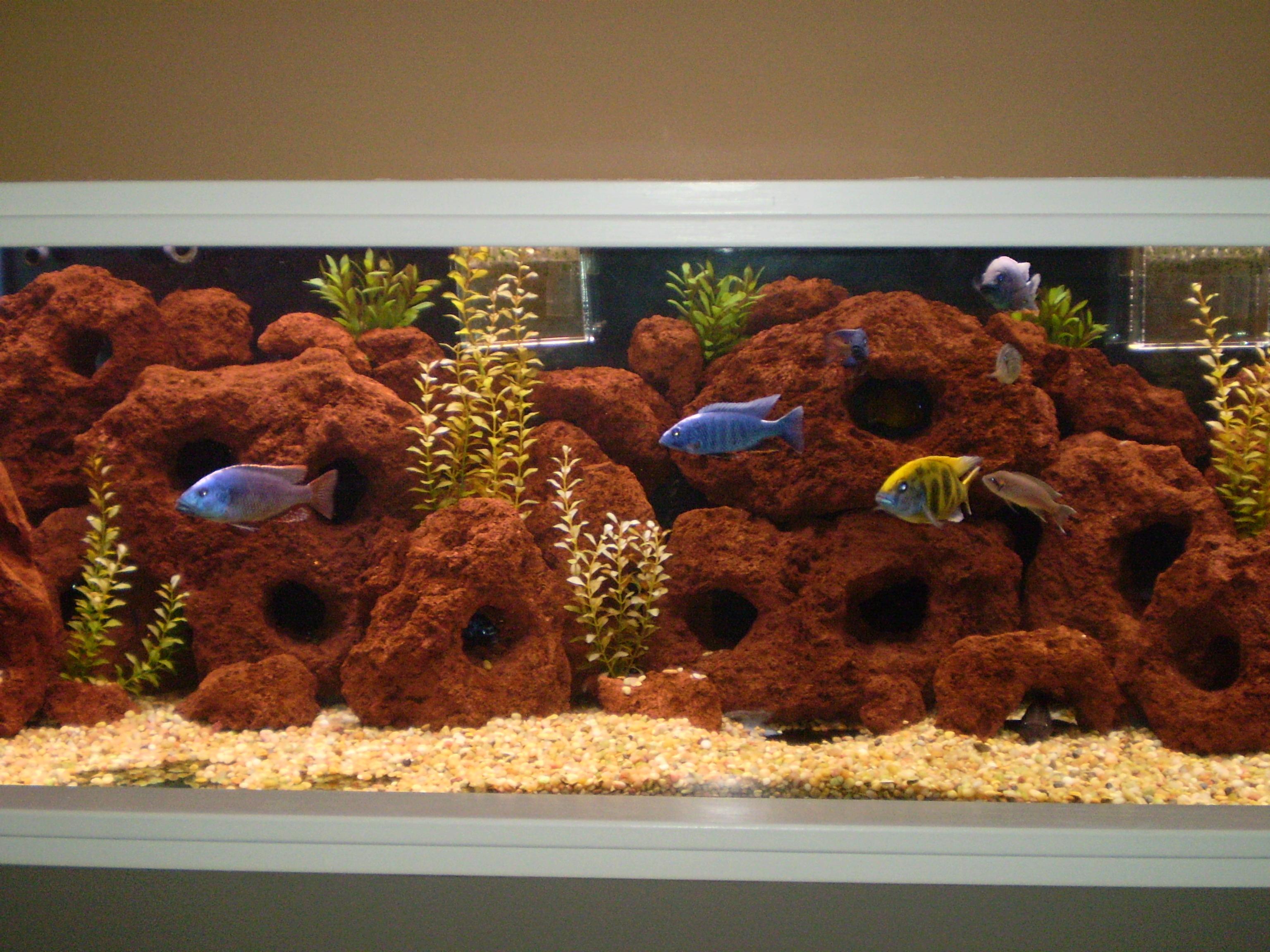 Cichlids Com 200 Gallon Aquarium For Sale
