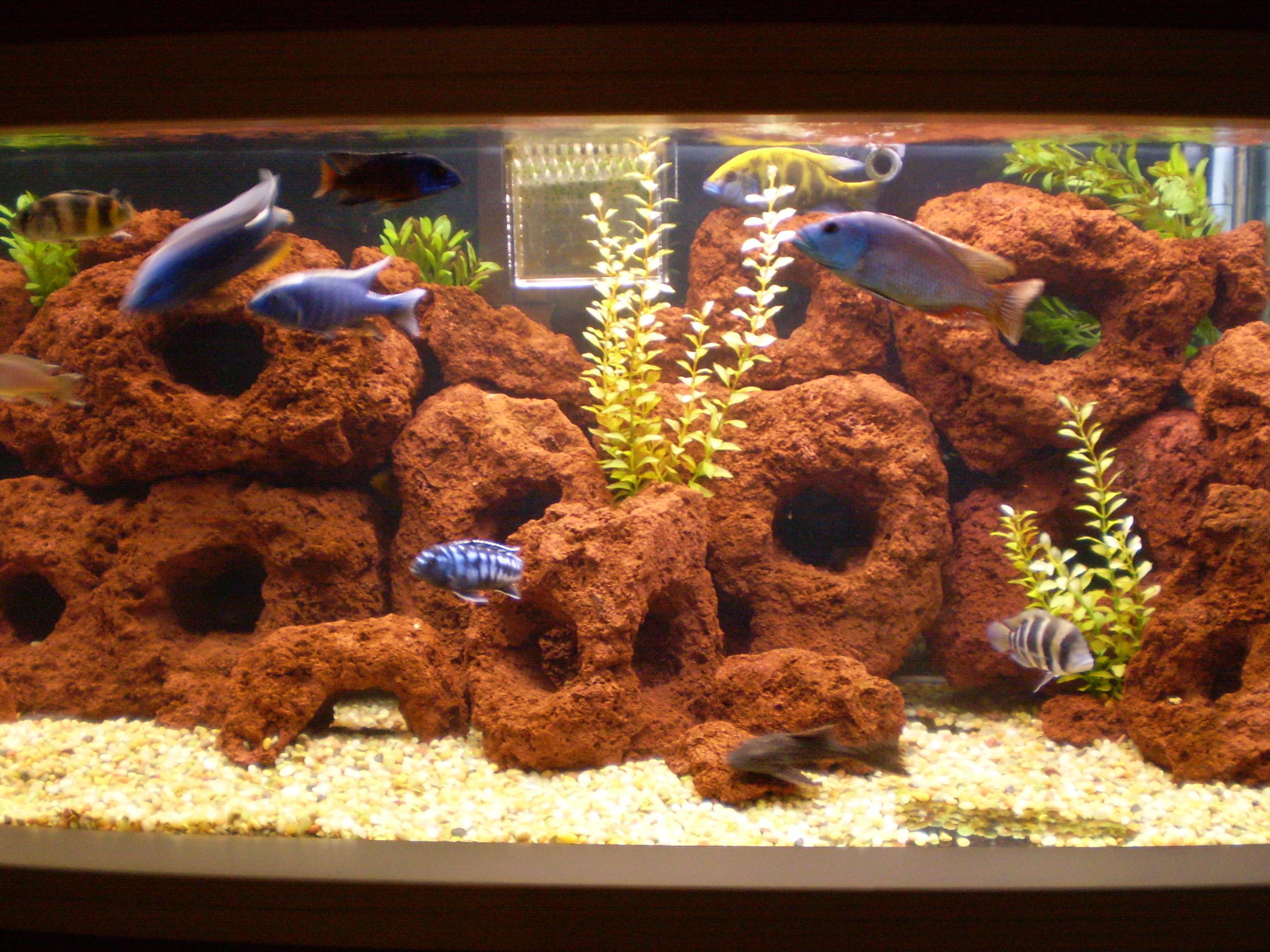 200 gallon tank for sale for 200 gallon fish tank for sale