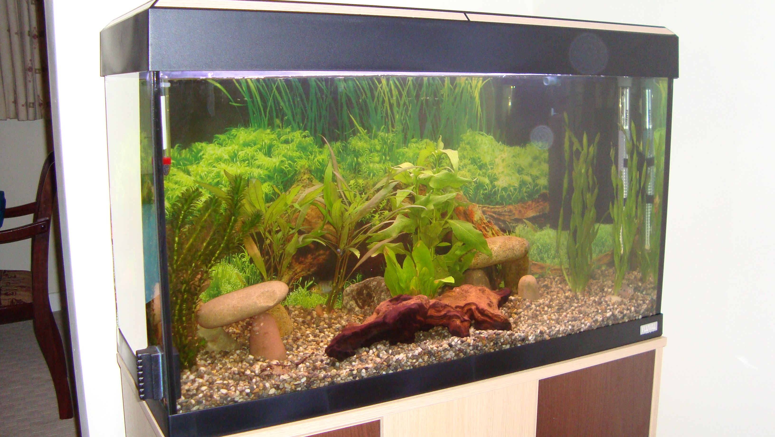 30 gallon fish tank in litres tank Thirty gallon fish tank