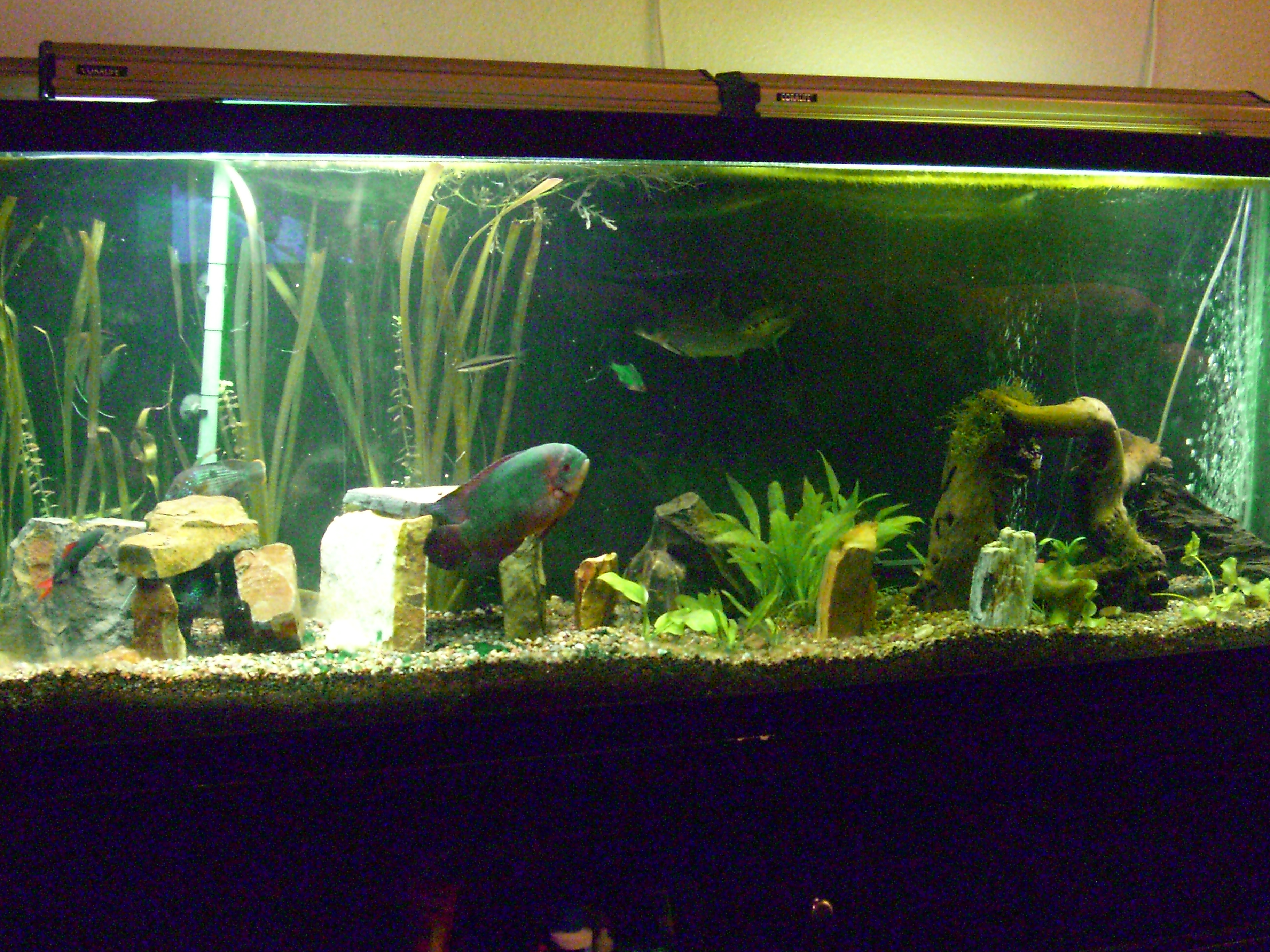 Tank examples my 150 gallon for 150 gallon fish tank