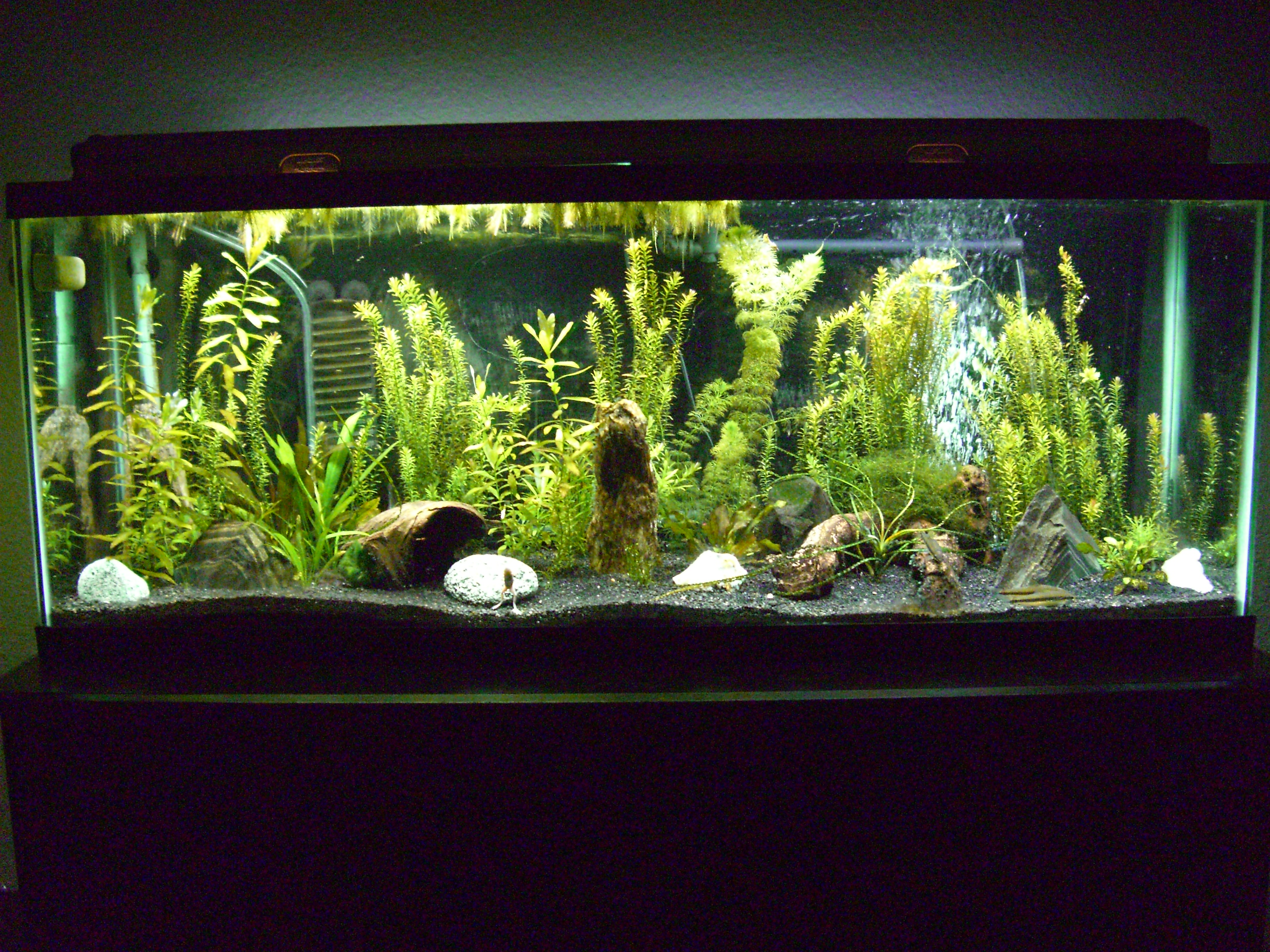 Tank examples for 55 gallon fish tank size