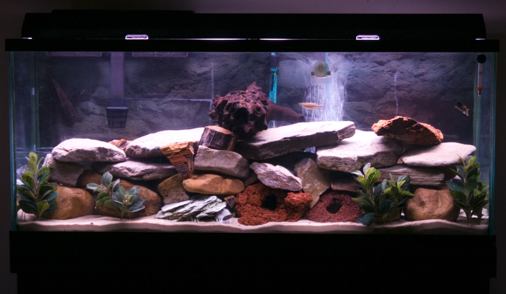 55 gallon fish tank how many cichlids 2017 fish tank for 55 gallon aquarium decoration ideas