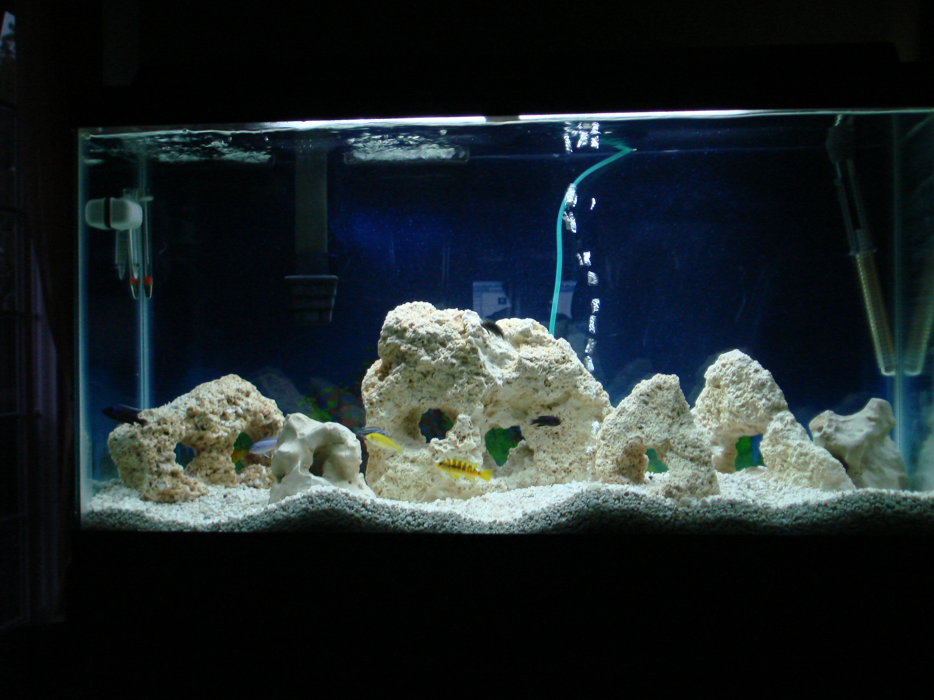 New backround for 38 gallon fish tank