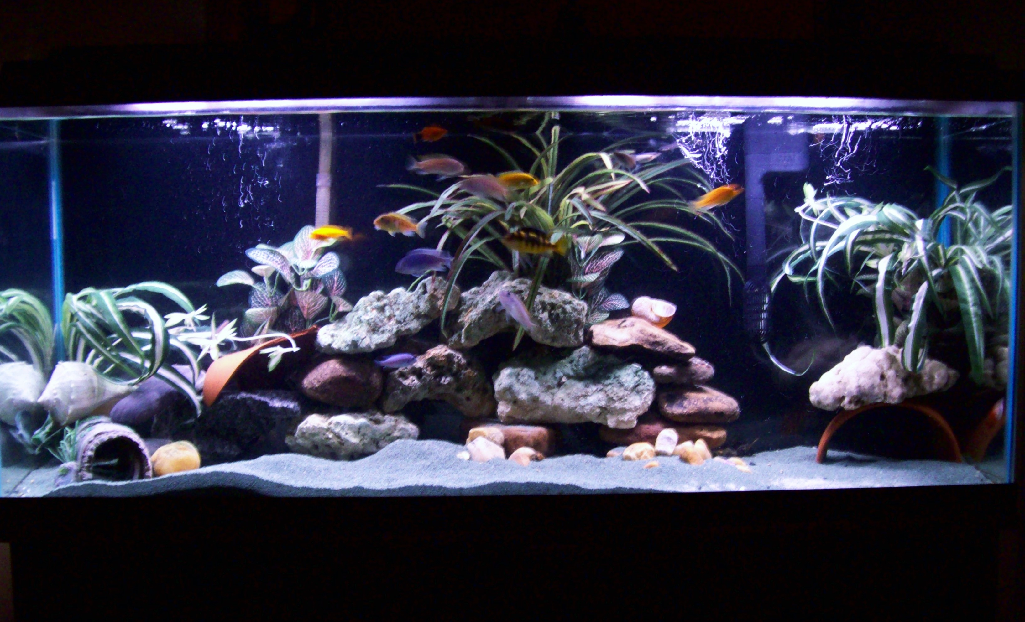 Tank examples 55 gal for African cichlid tank decoration