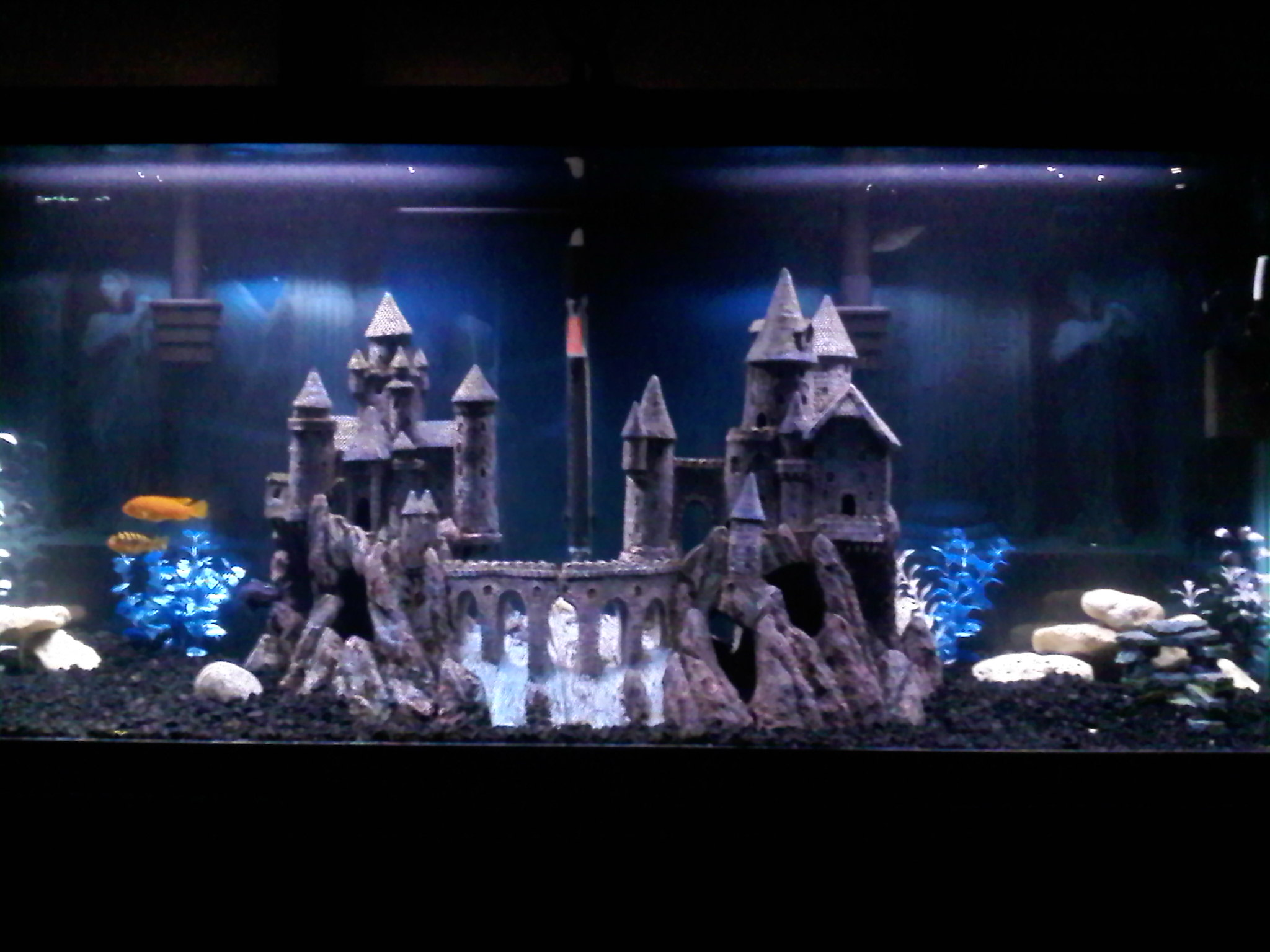 Tank examples kycen 39 s castle for Fish tank castle