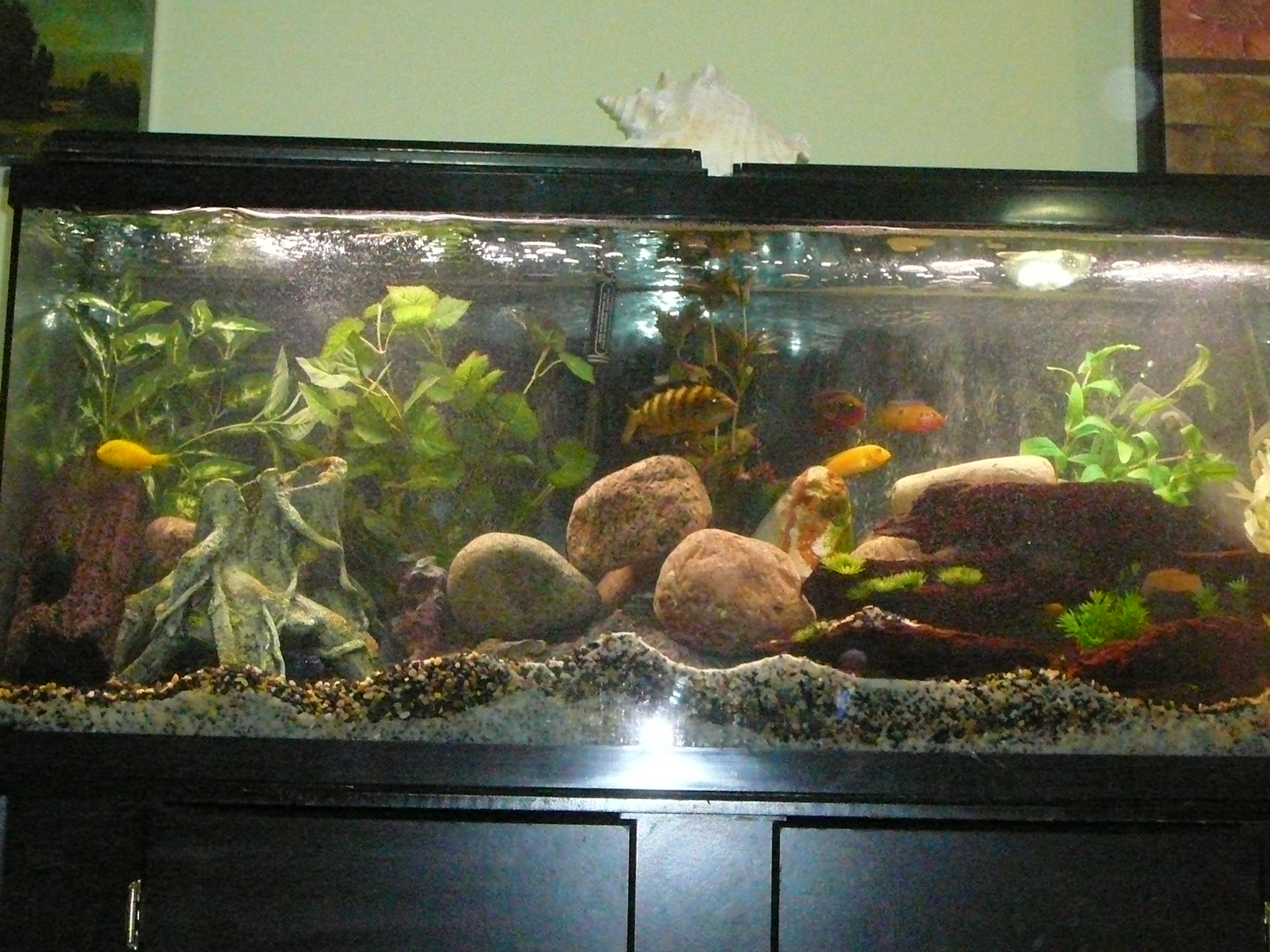 55 gallon fish tank gravel 55 gallon fish tank aquarium for Fish tank pebbles