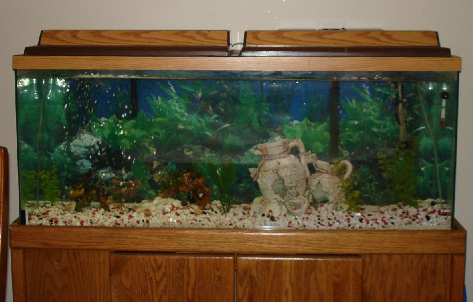 Cichlid Tank Decorations Cichlid Tank For rd And Con