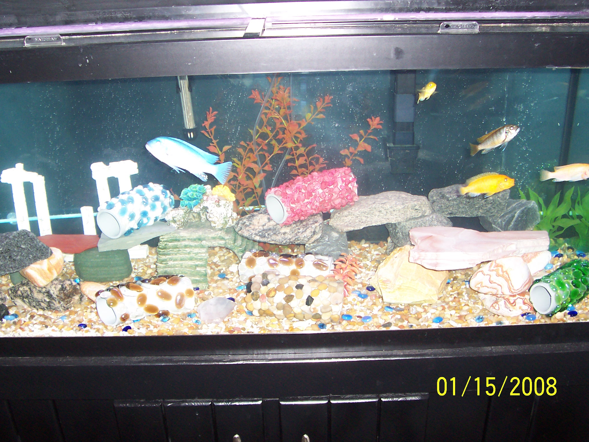 Tank examples question about fish for Fish tank riddle