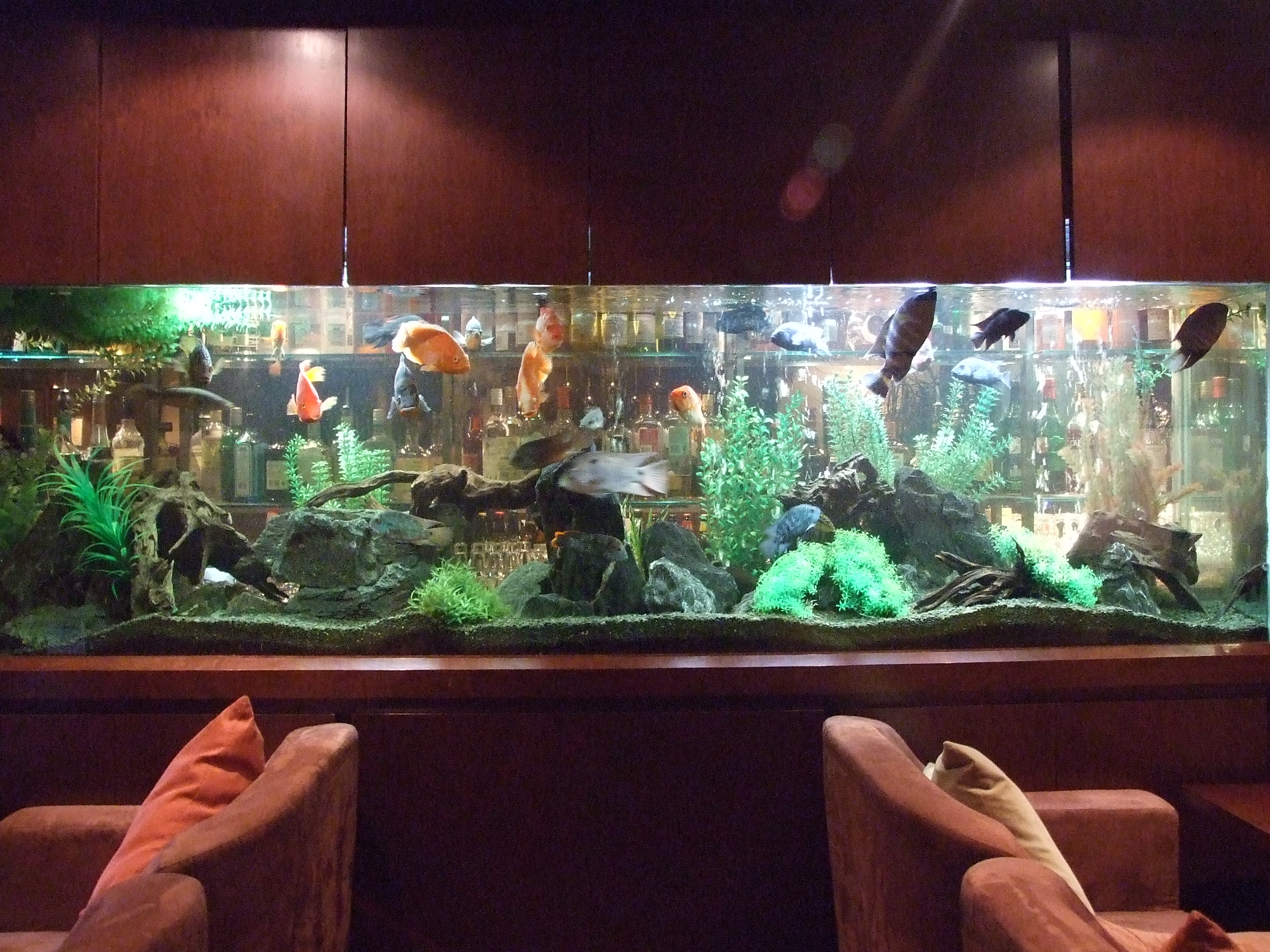 Photo store peacock bass aquariums download for Bass fish tank