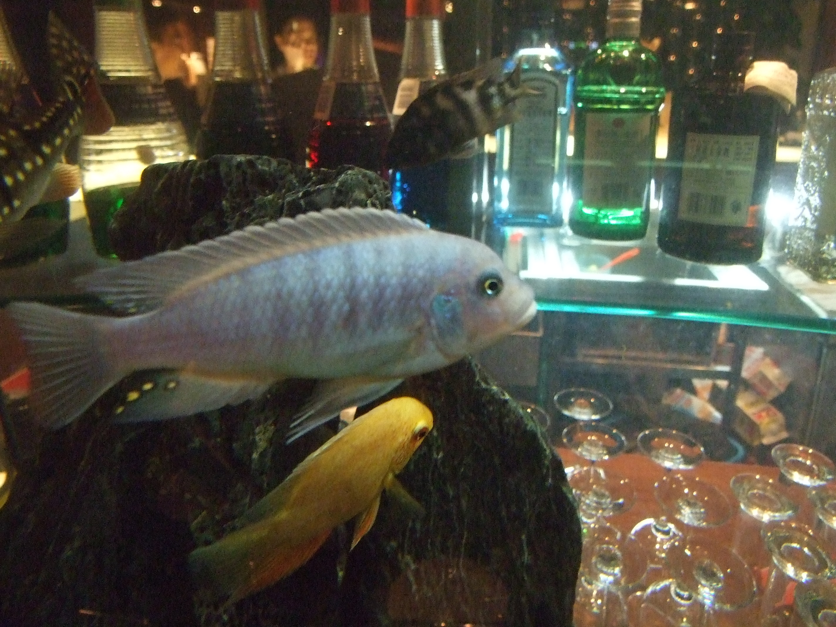 The first official fish of my tank for First fish tank