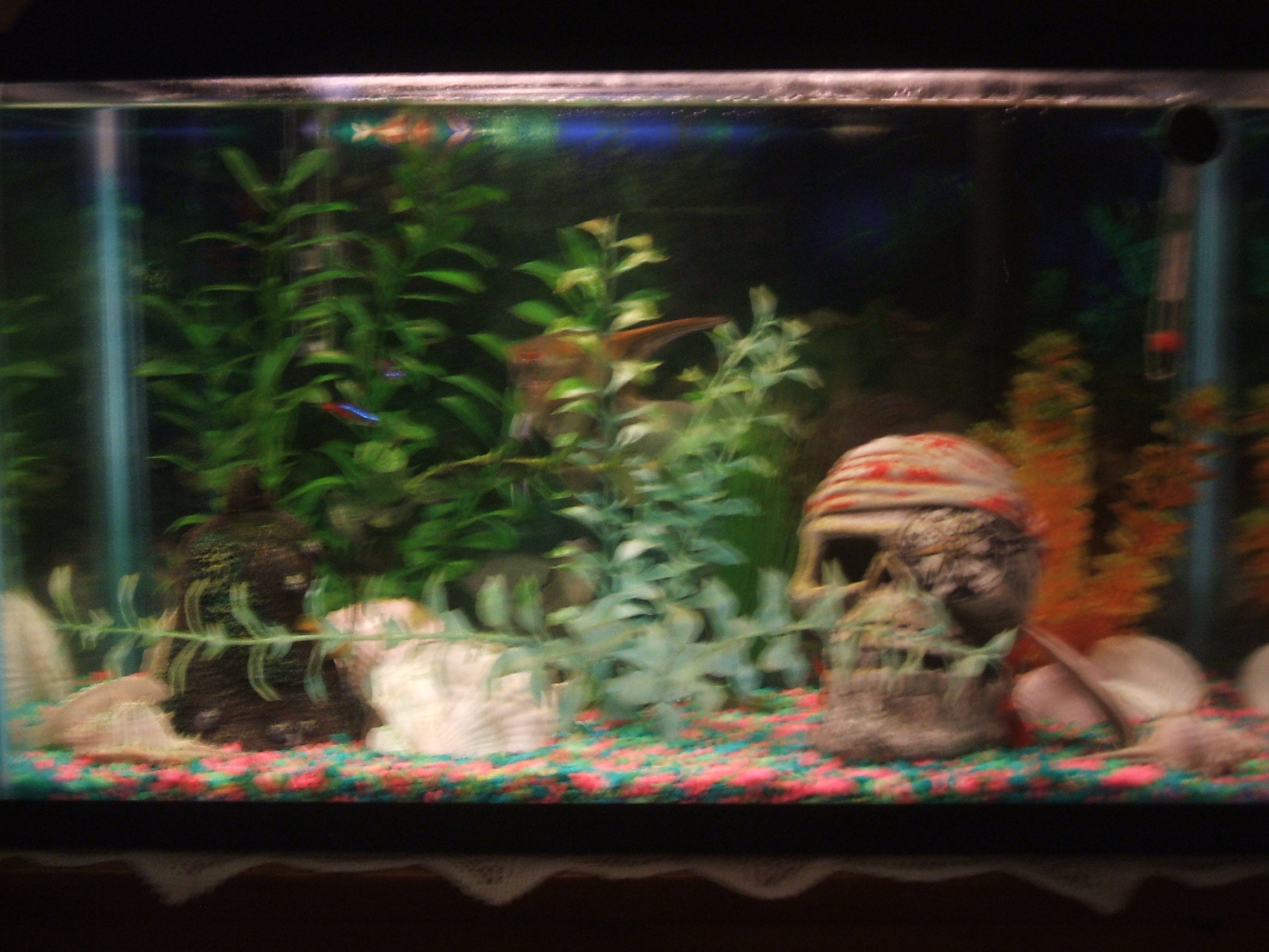 10 gallon fish tank examples tank examples for Fish for a 10 gallon tank