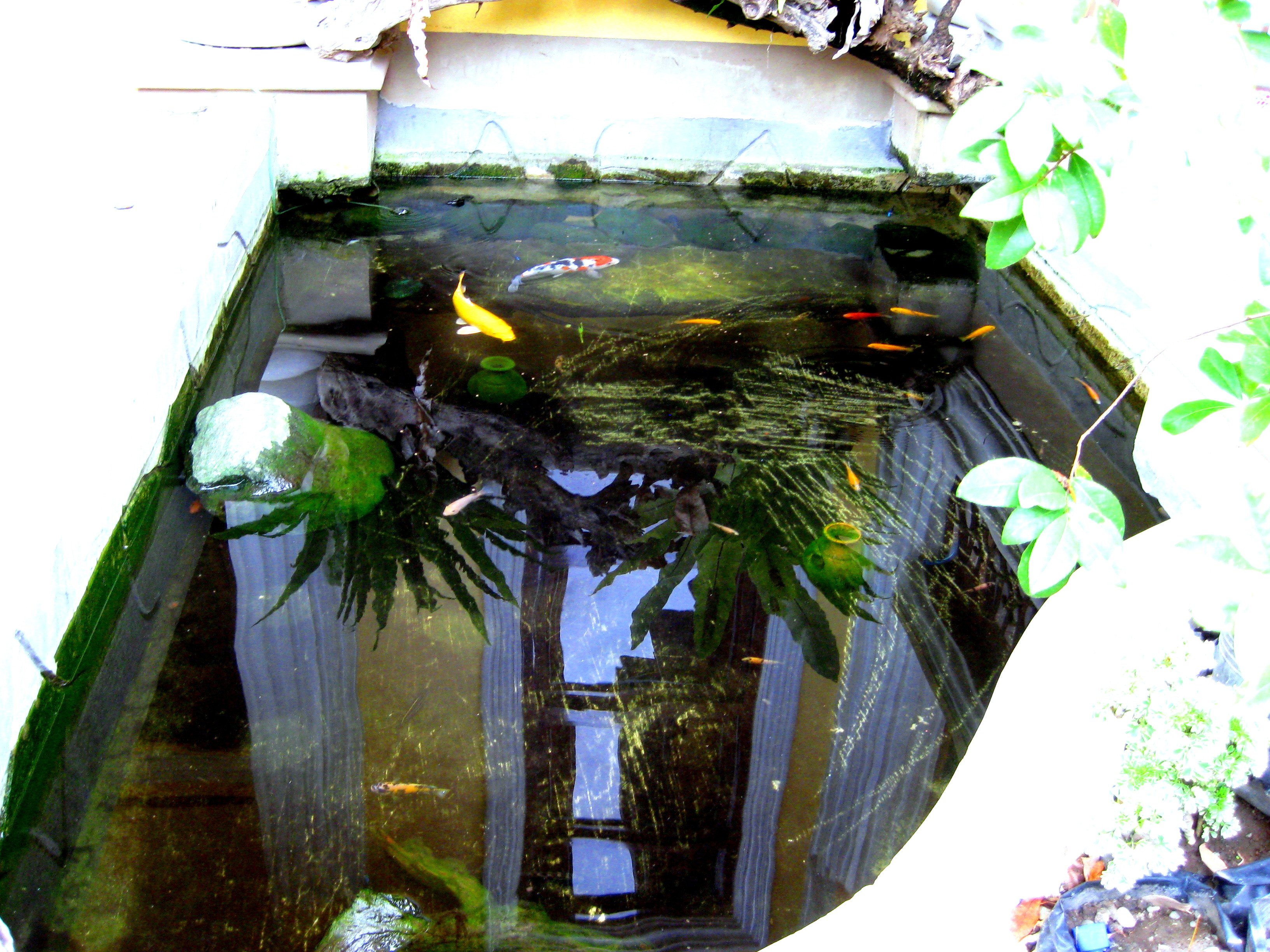 Mini fish pond also the place were i breed for Mini fish pond