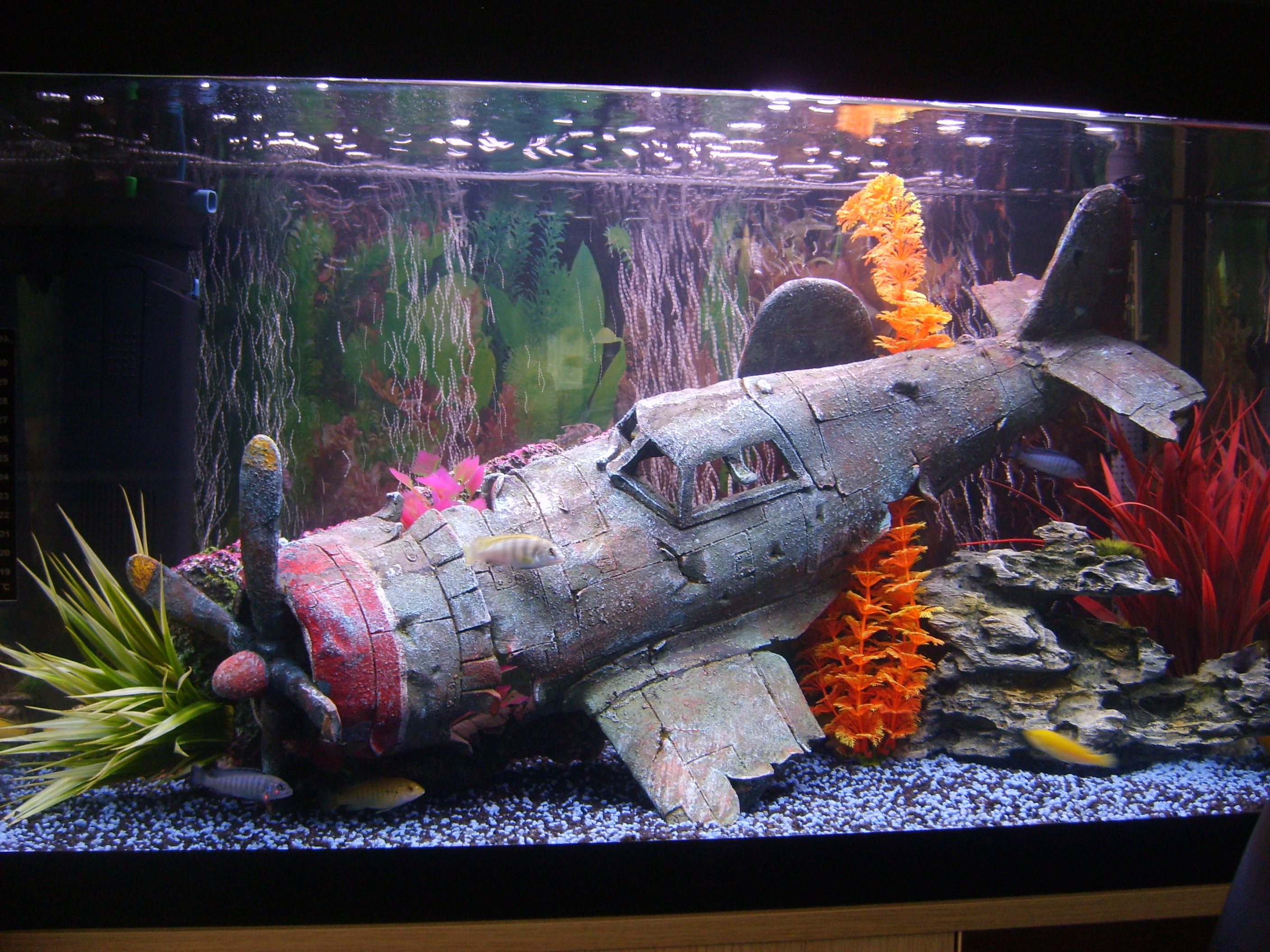 Cichlids types picture and images for Lava rock fish tank