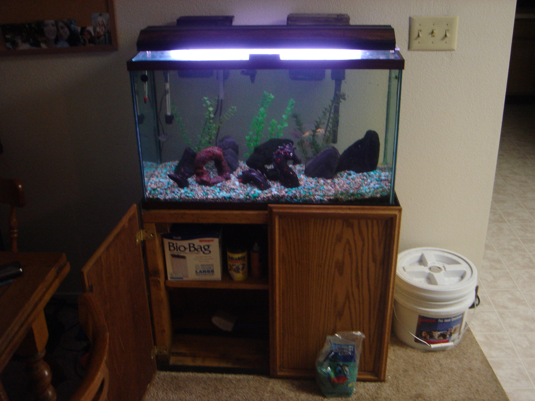 30 Gallon Fish Tank Videos Gallon Firemouth Tank 102: thirty gallon fish tank