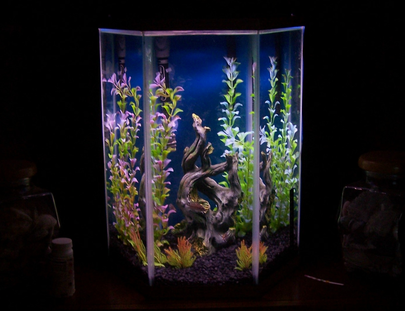 10 gallon hexagon aquarium for 20 gallon fish tank size