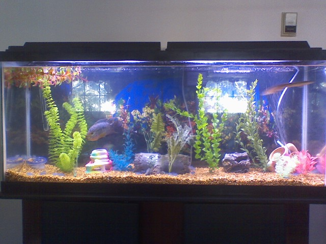 What is a really good fish fliter system for for 30 gallon fish tank walmart
