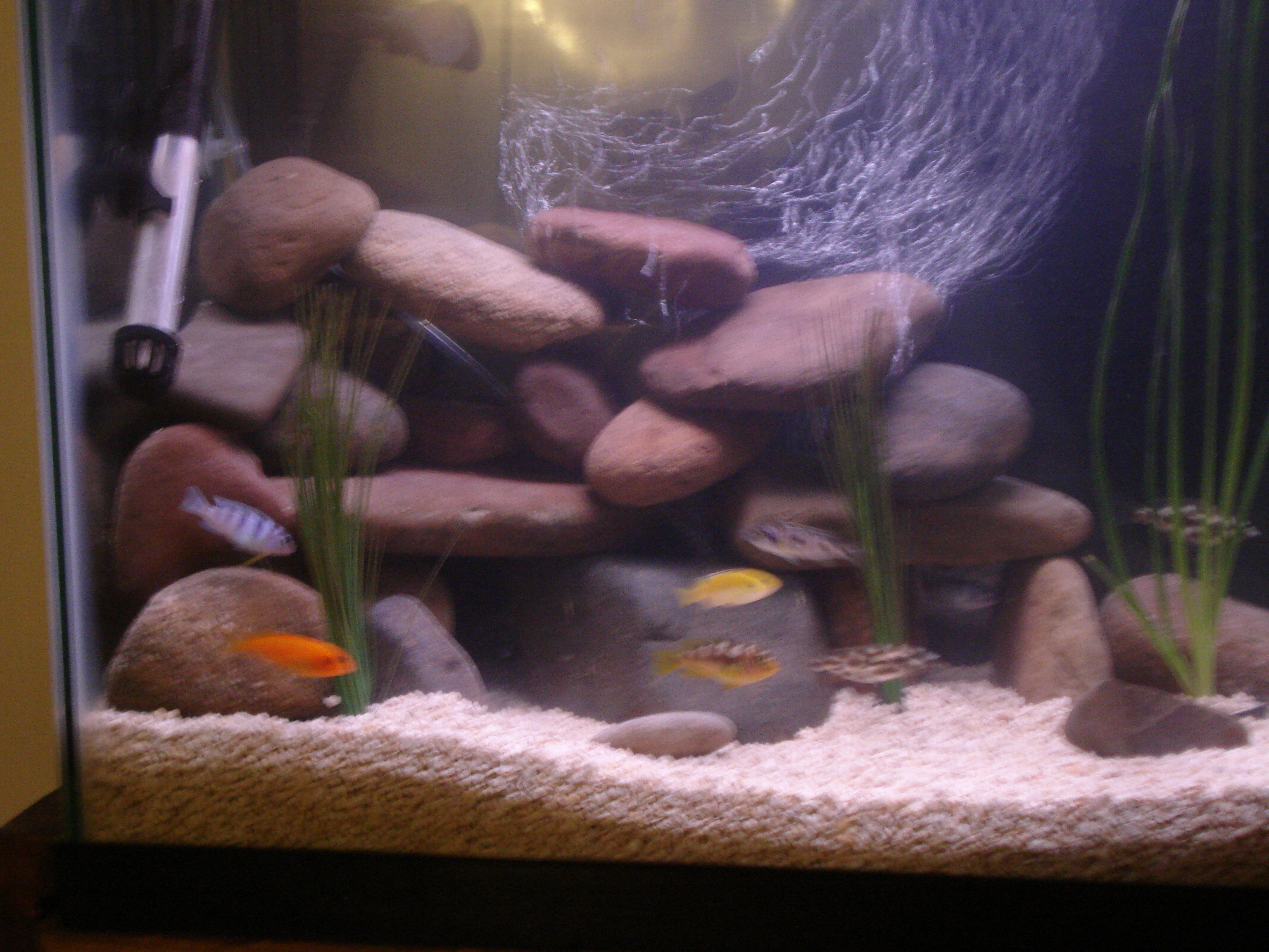 Technics for African cichlid rock decoration
