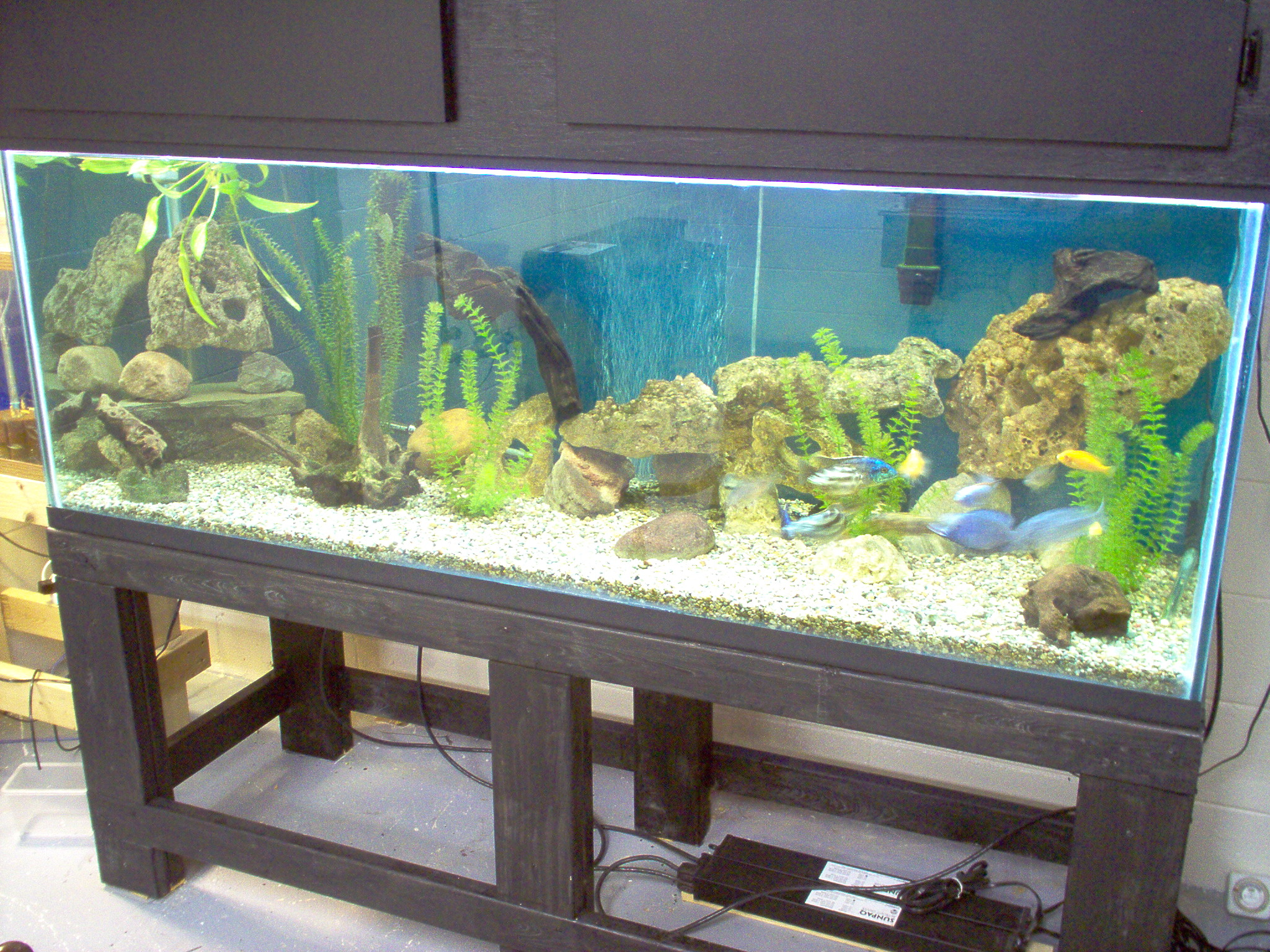 Tank examples my 200 gallon cichlid tank for 200 gallon fish tank