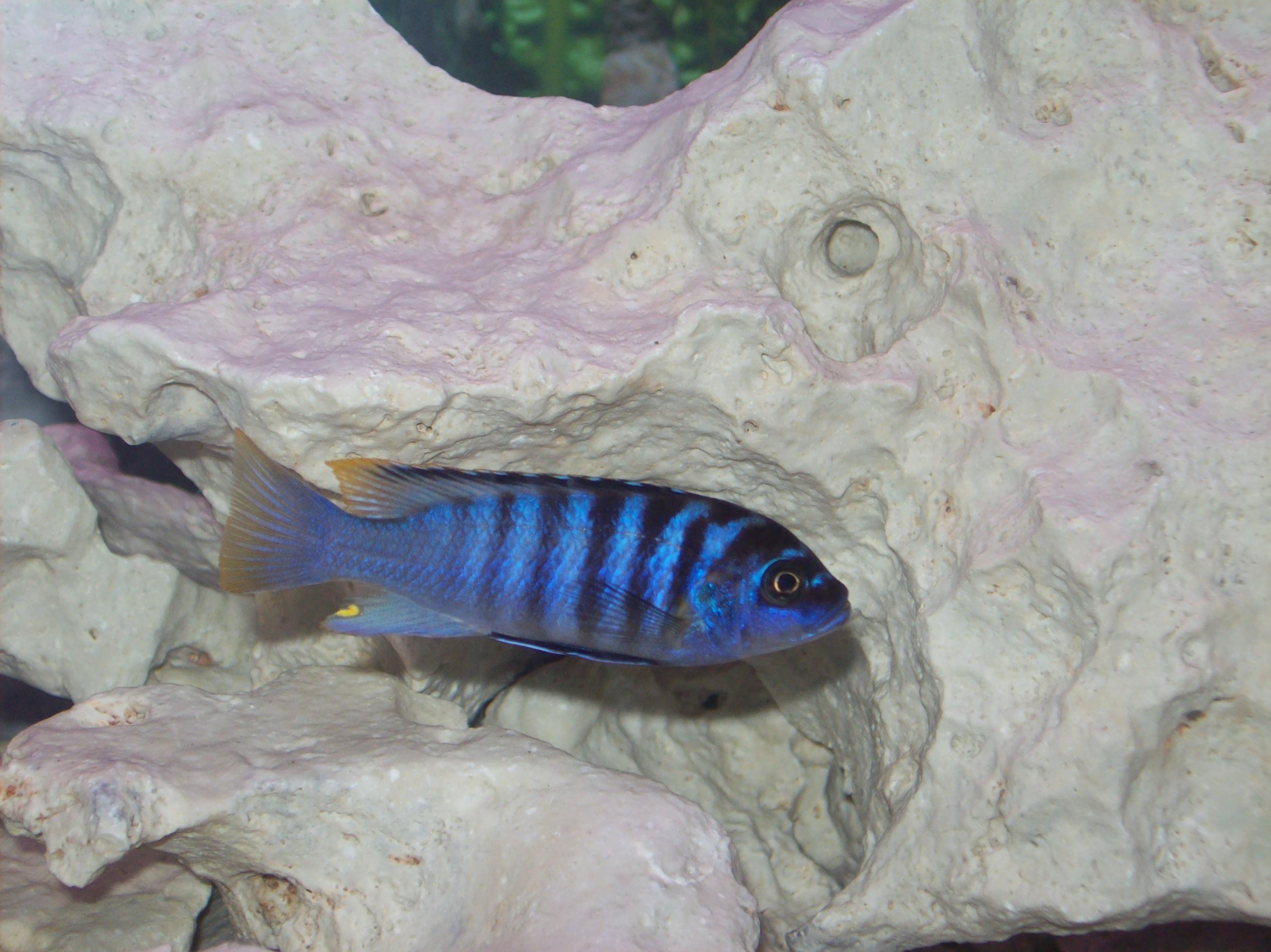 Same Fish Luwino Reef
