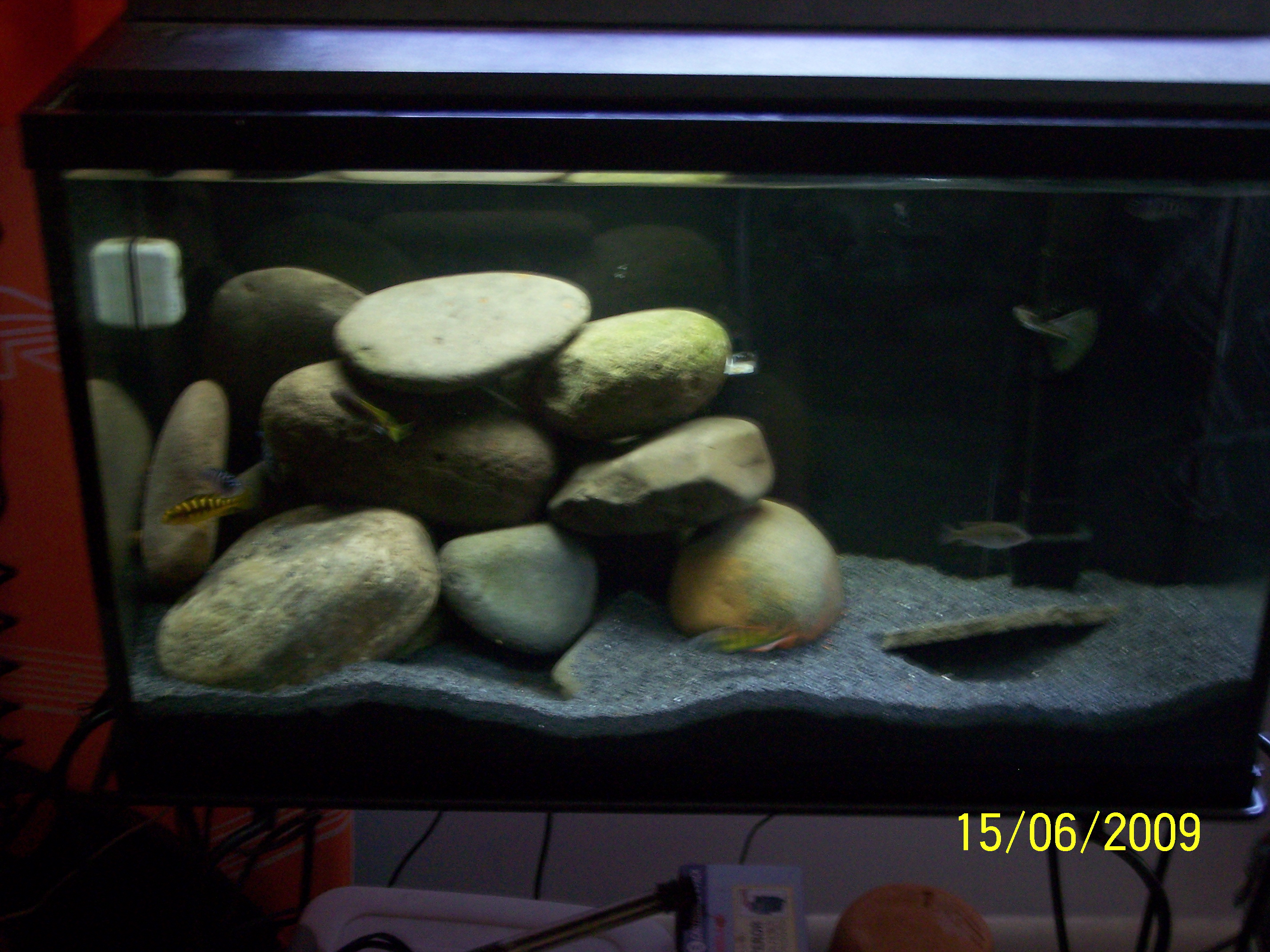 Tank examples cichlid tank 29 for African cichlid tank decoration