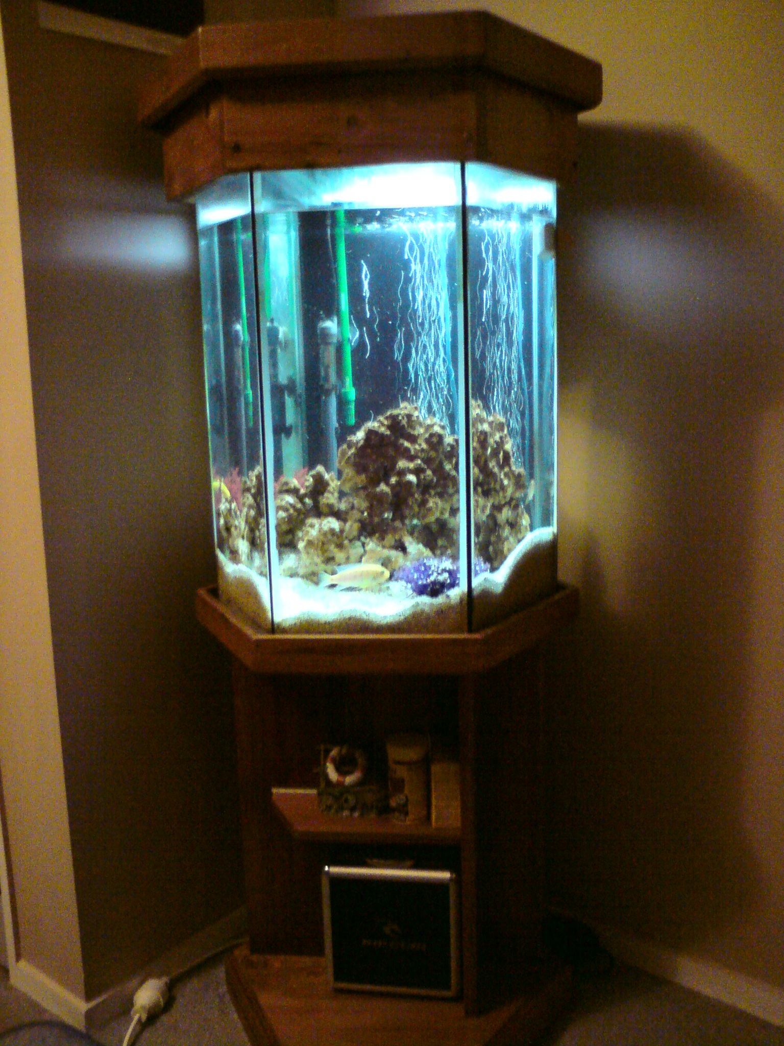 40 gallon hexagon aquarium 1000 aquarium ideas for Hexagon fish tank