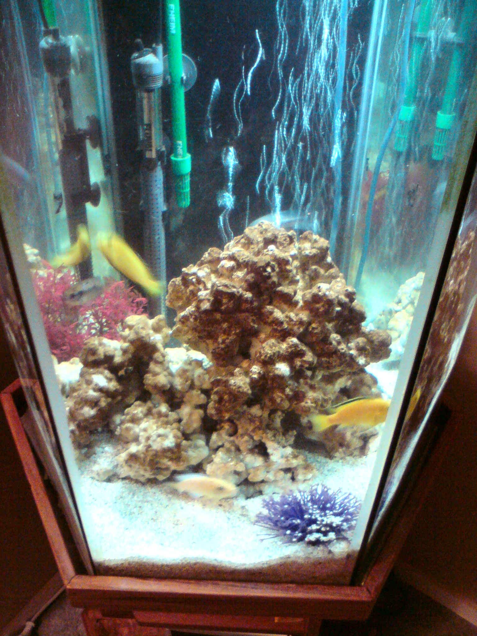 Tank examples for Hexagon fish tank