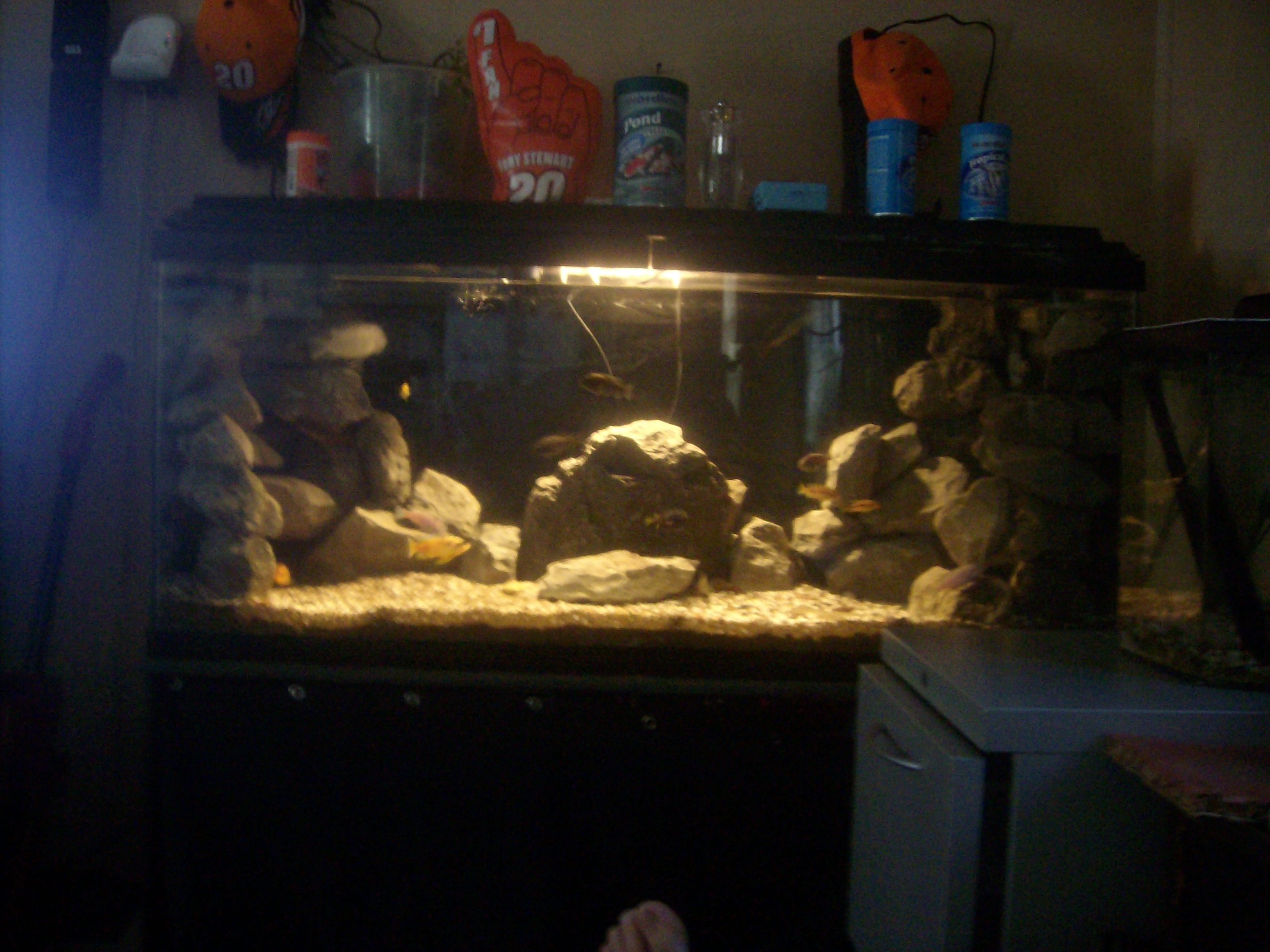 My fish tank for My fish tank