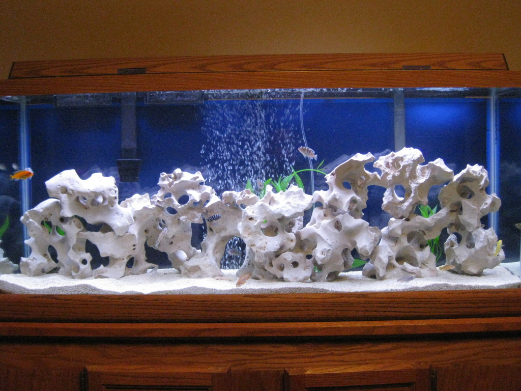 Texas holey rock the reef tank for African cichlid rock decoration