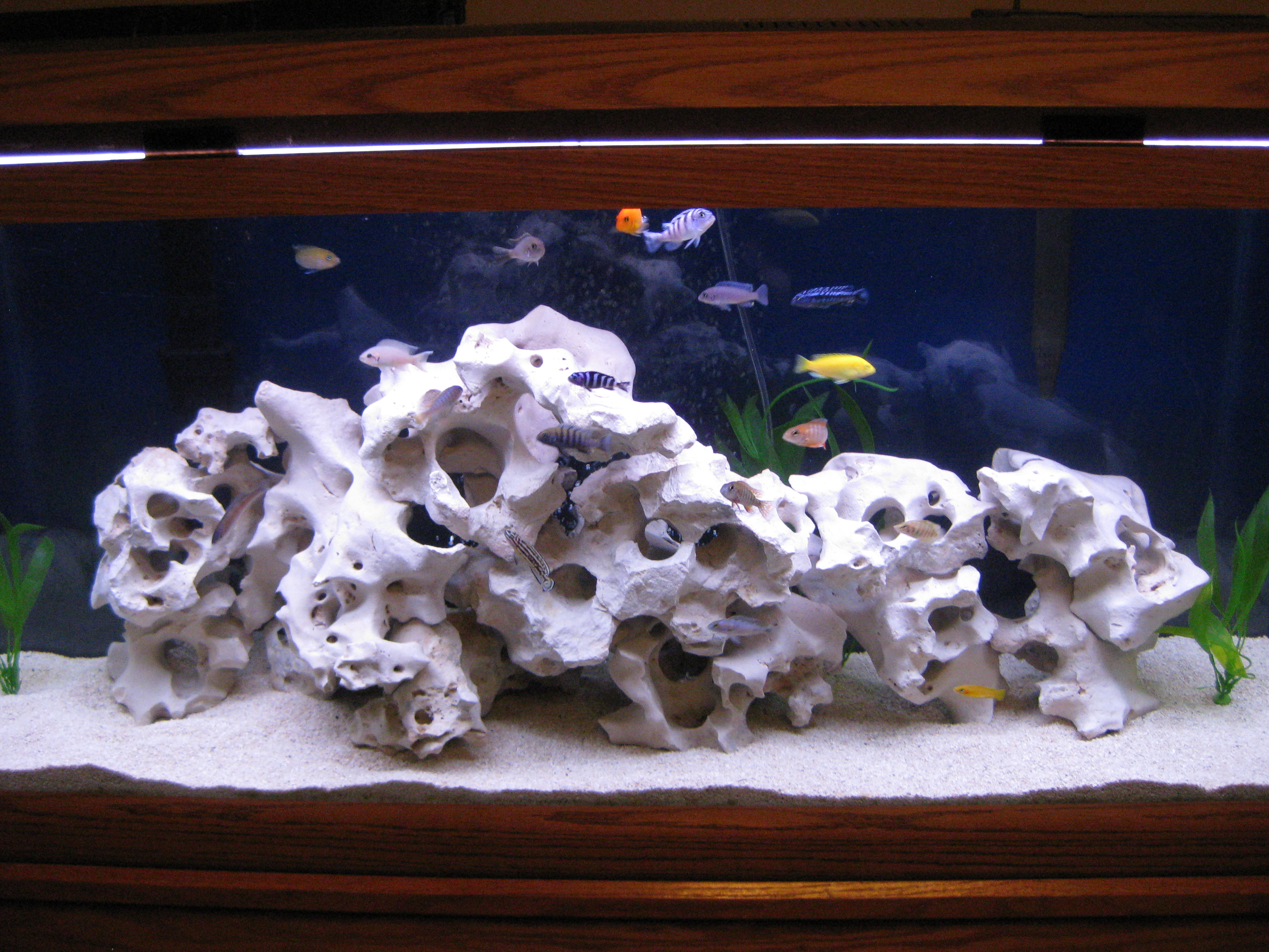 Texas holy rock 1 for Deep blue fish tanks