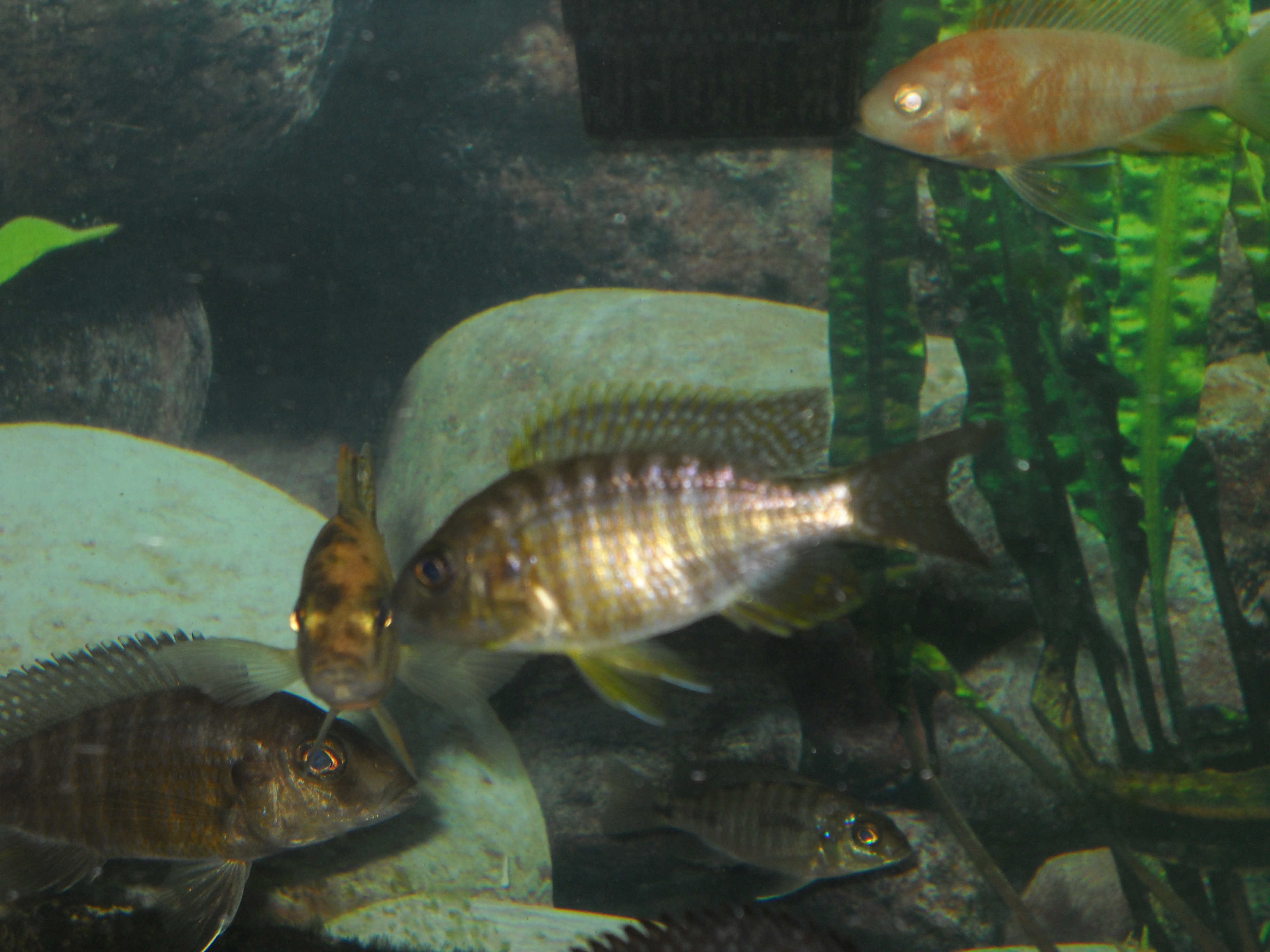 One Of The Undu Reef Juvies Is Coloring Up