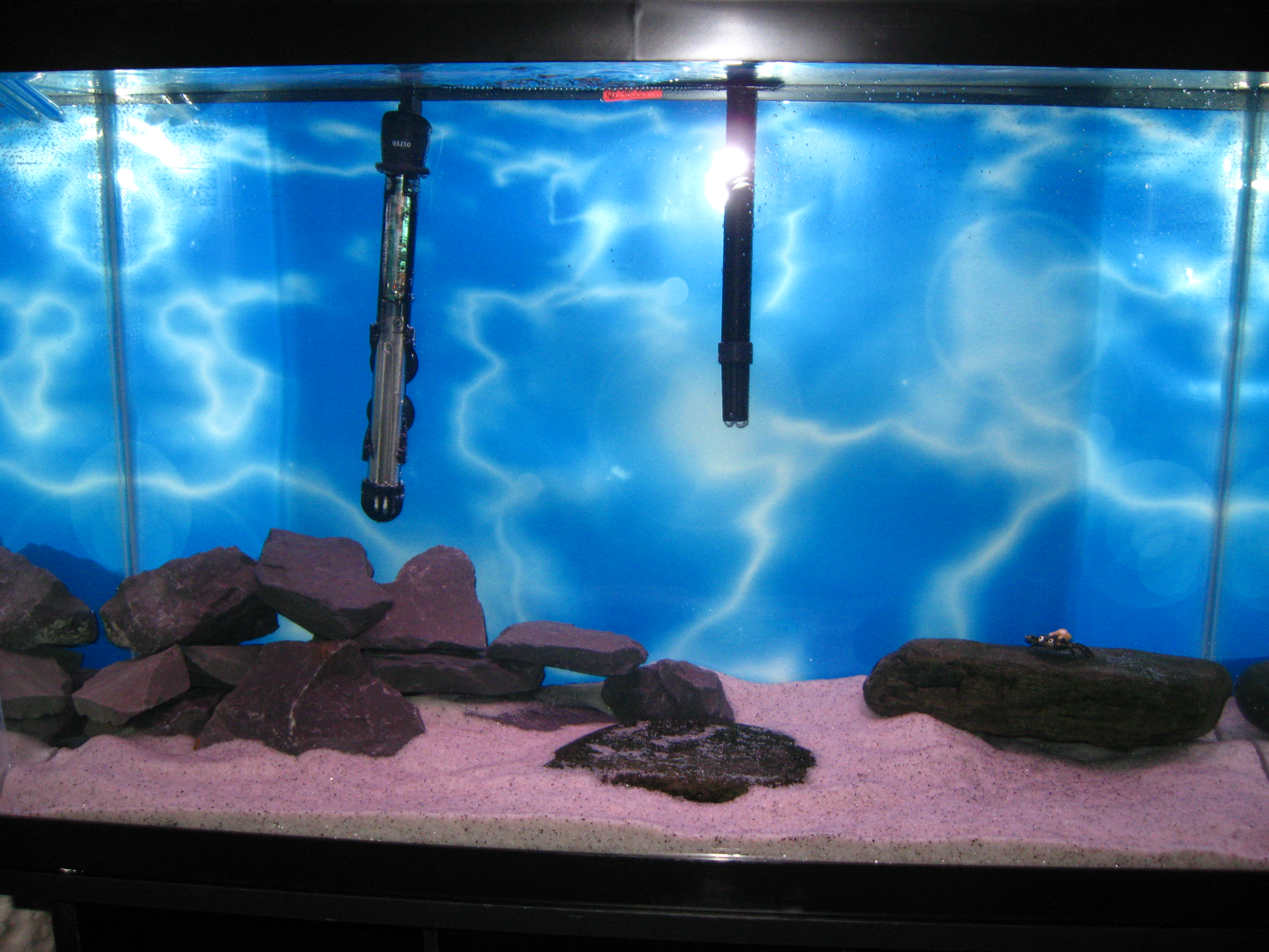 Fish tank 30x12x18 30 gallon fish tank image galleries for Fish for 2 gallon tank