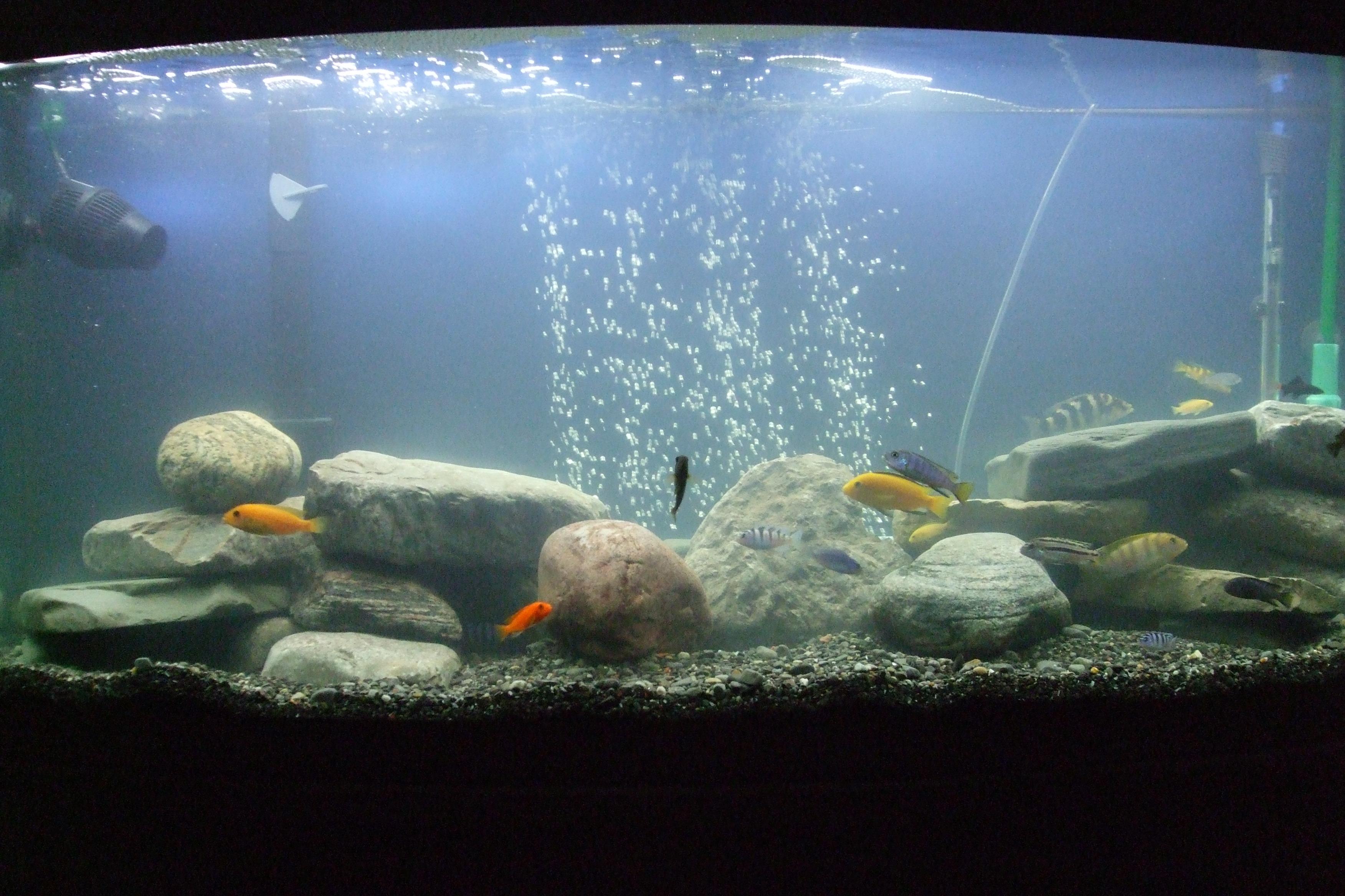 Aquarium bacteria bloom 1000 aquarium ideas for Bacterial bloom fish tank