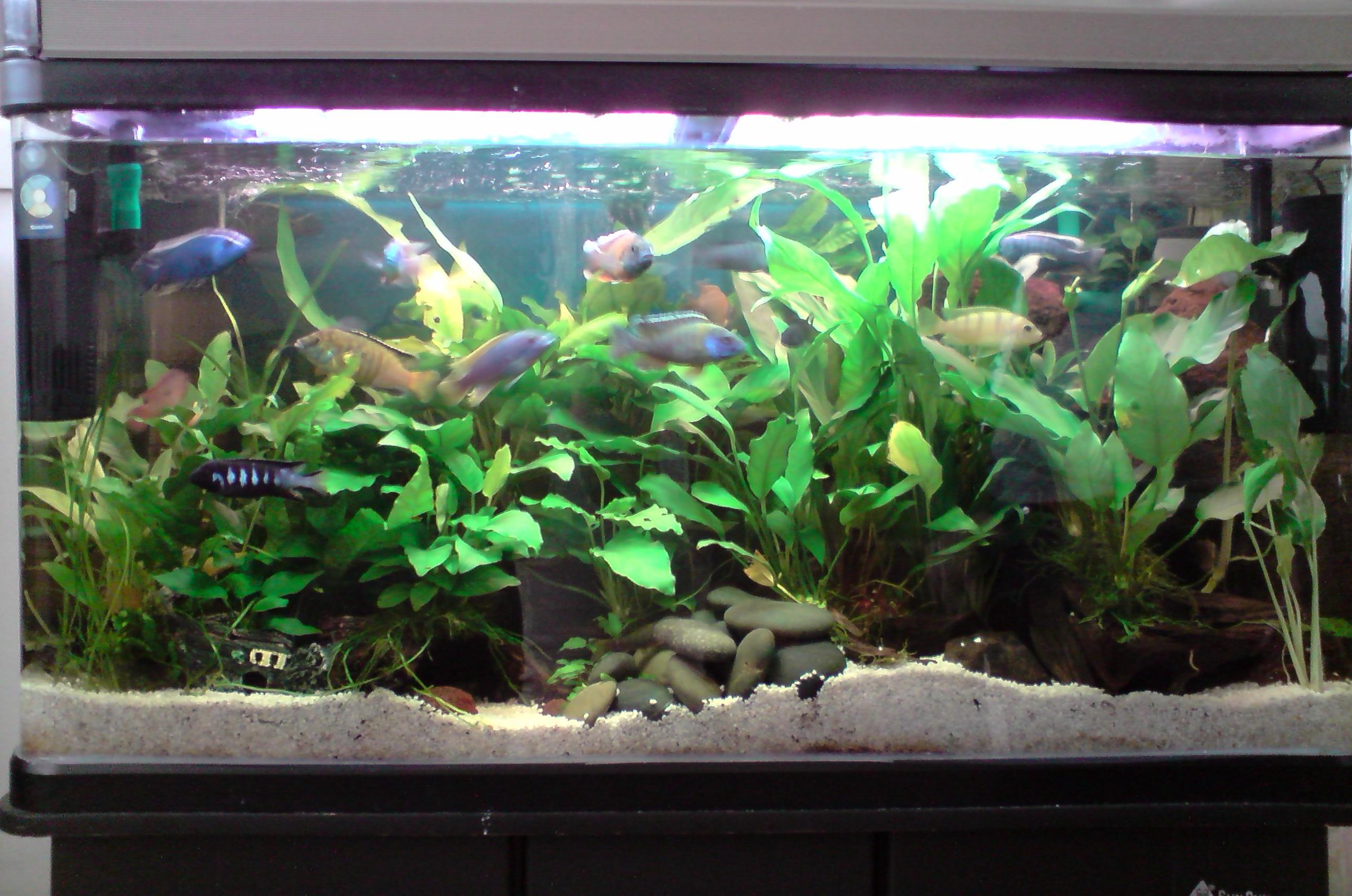Freshwater aquarium fish brisbane - Description
