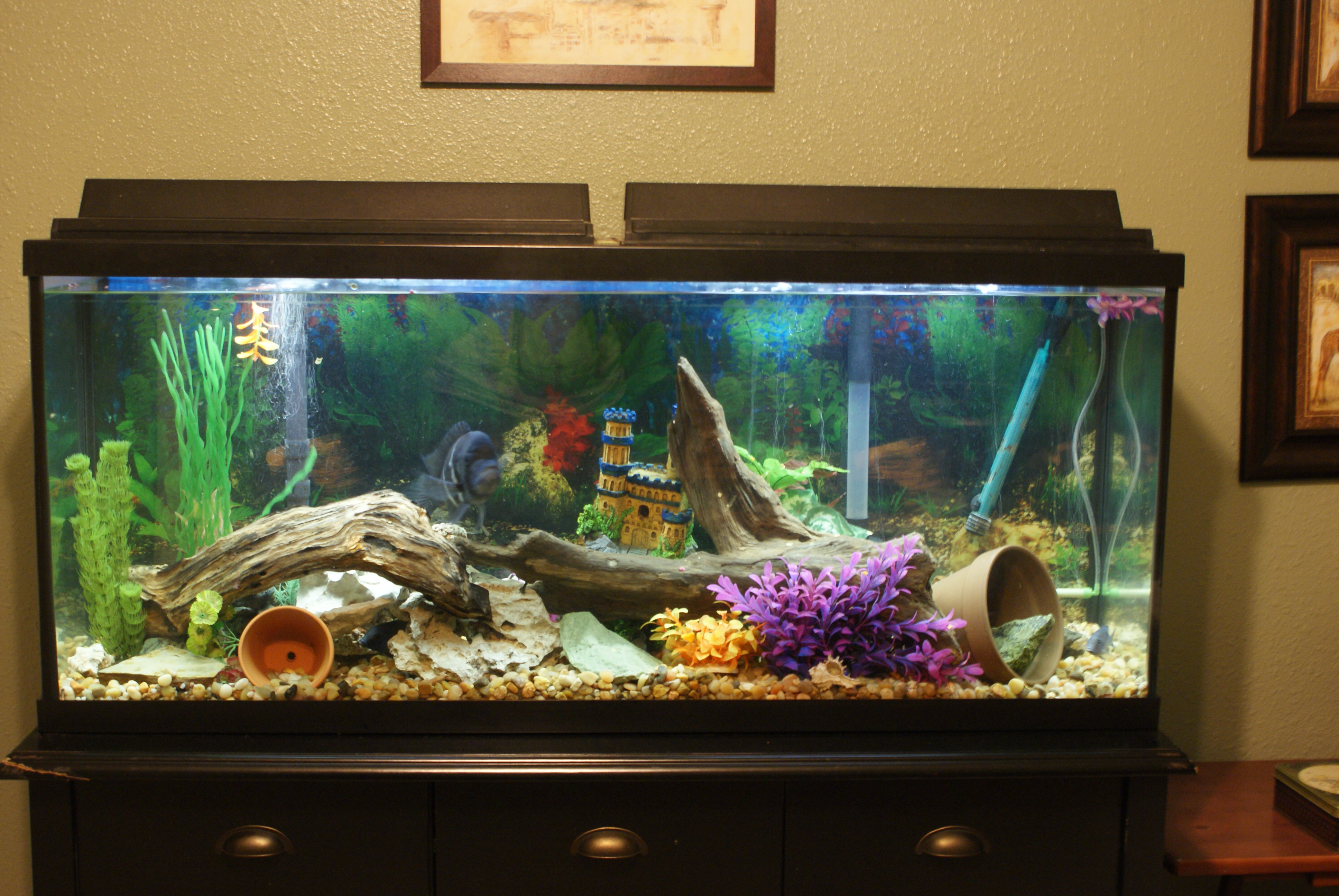 60 gallon tank for How to clean a 10 gallon fish tank