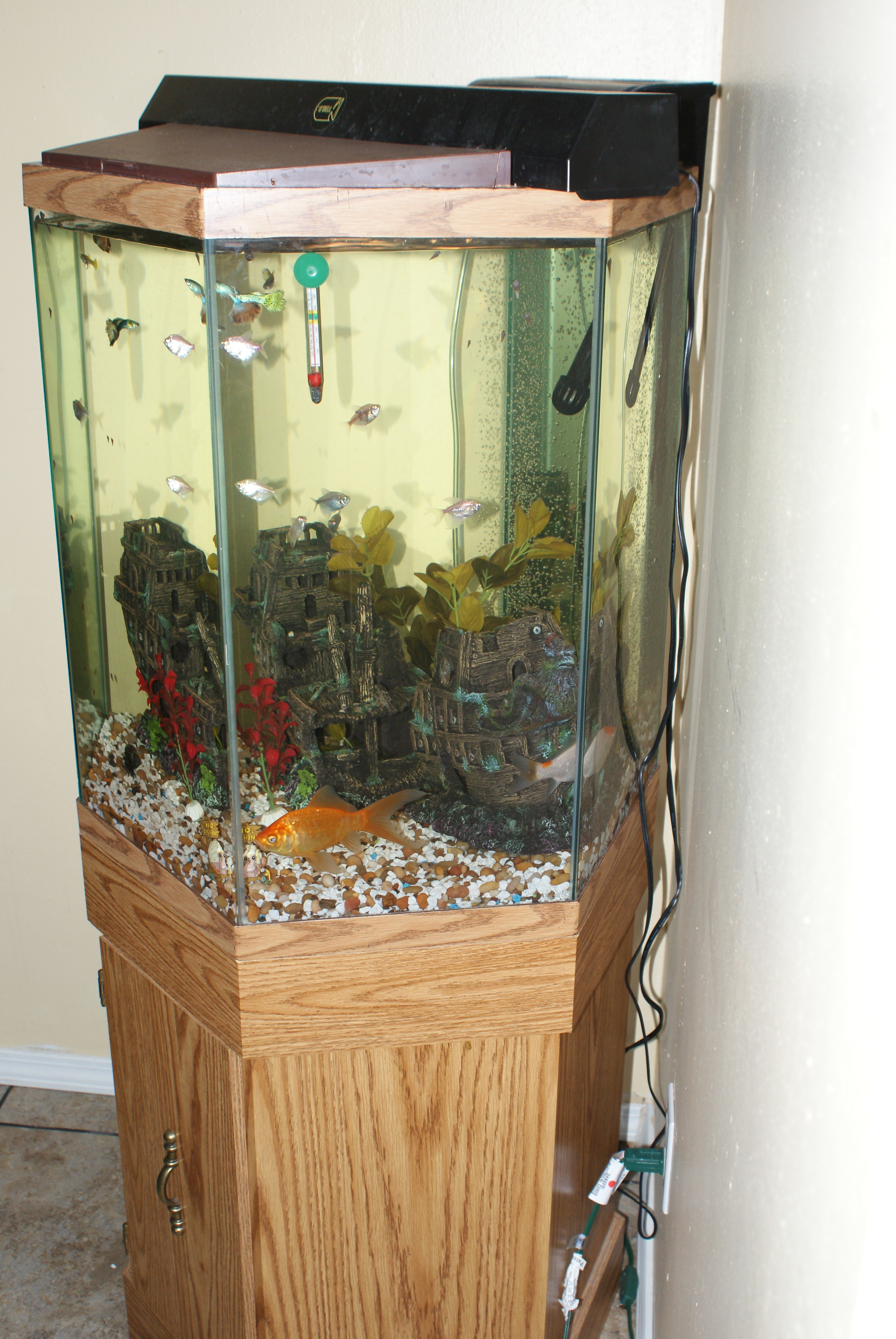 Discus tank for 35 gallon fish tank